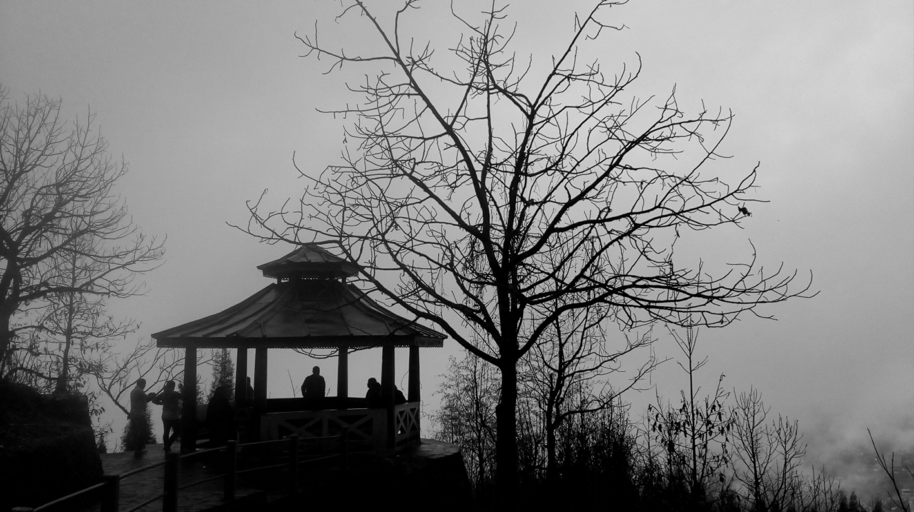 I was in the botanical garden in gangtok. I saw the combination of the tree and the shed. They together looked very nice and creates a perfect scenario in the foggy weather. They together shared their respective beauty. If they were separated then they will be not a subject of interest.