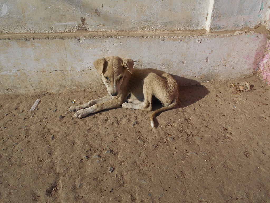 THIS PHOTO CLICKED BY ME OF THIS SWEET AND CUTE DOG IN A REMOTE AREA, IN THE INTERIORS OF A SMALL VILLAGE WHERE I SAW HIM HE LOOKED VERY SLEEPY AND RELAXING IN ONE CORNER RECENTLY IN THE MONTH OF FEBRUARY, 2017...