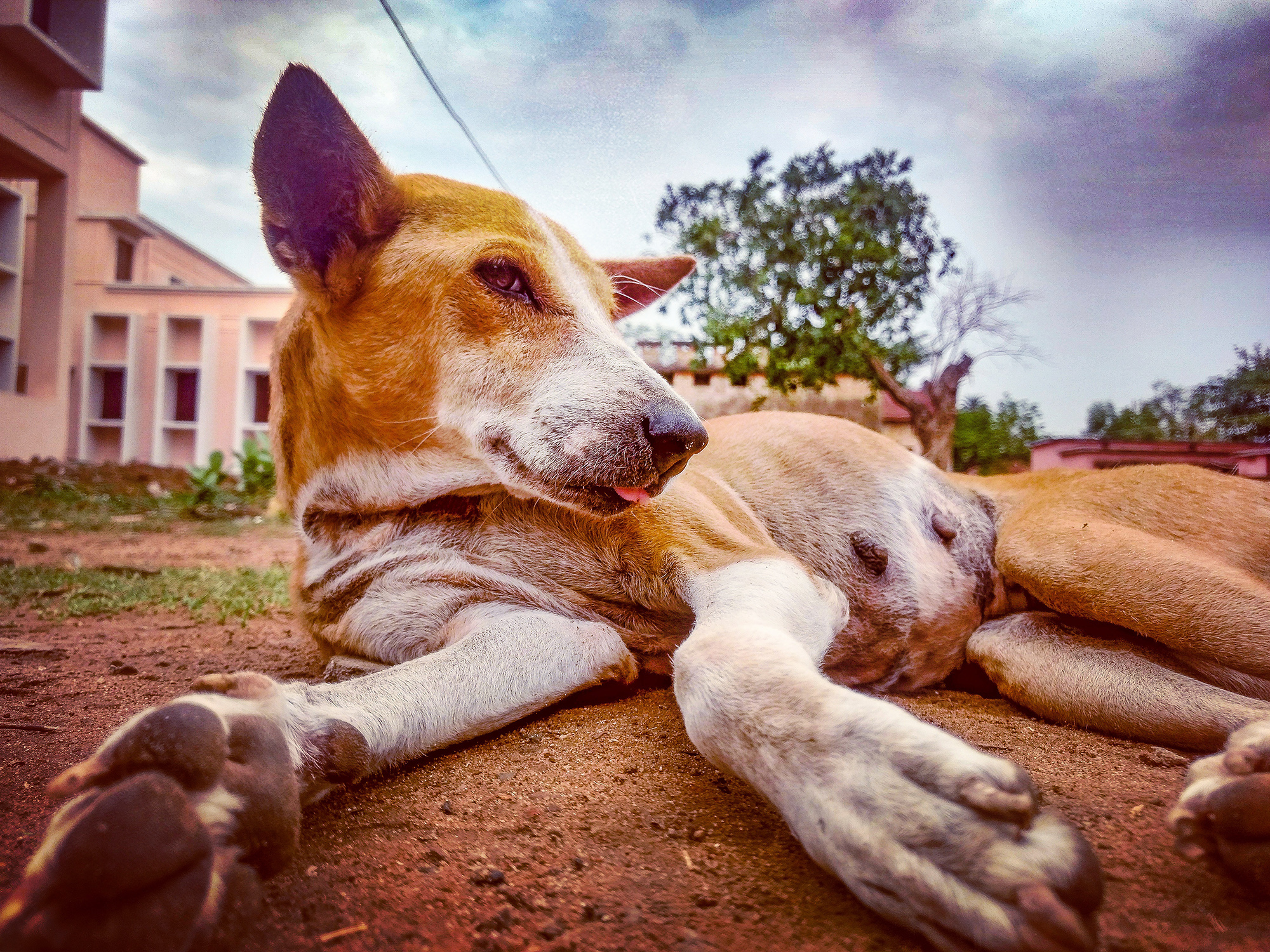 she is really lazy .she spends most of the time by sleeping .just found her sleeping in front of my home and clicked this .:)