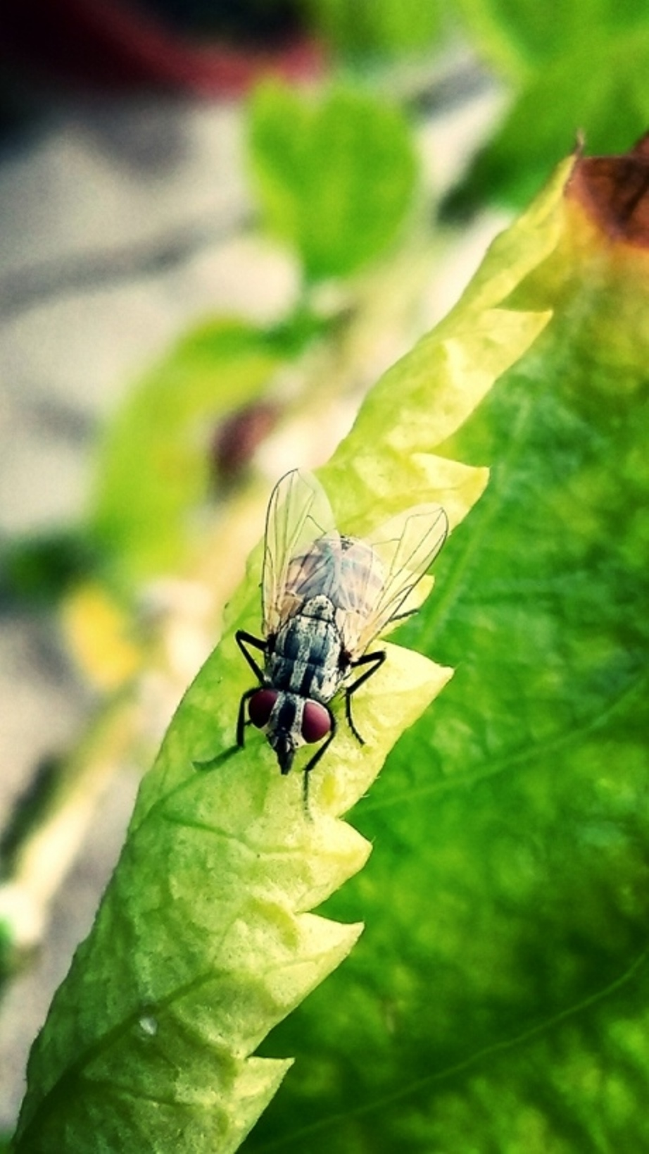 A fly resting on a leaf surface