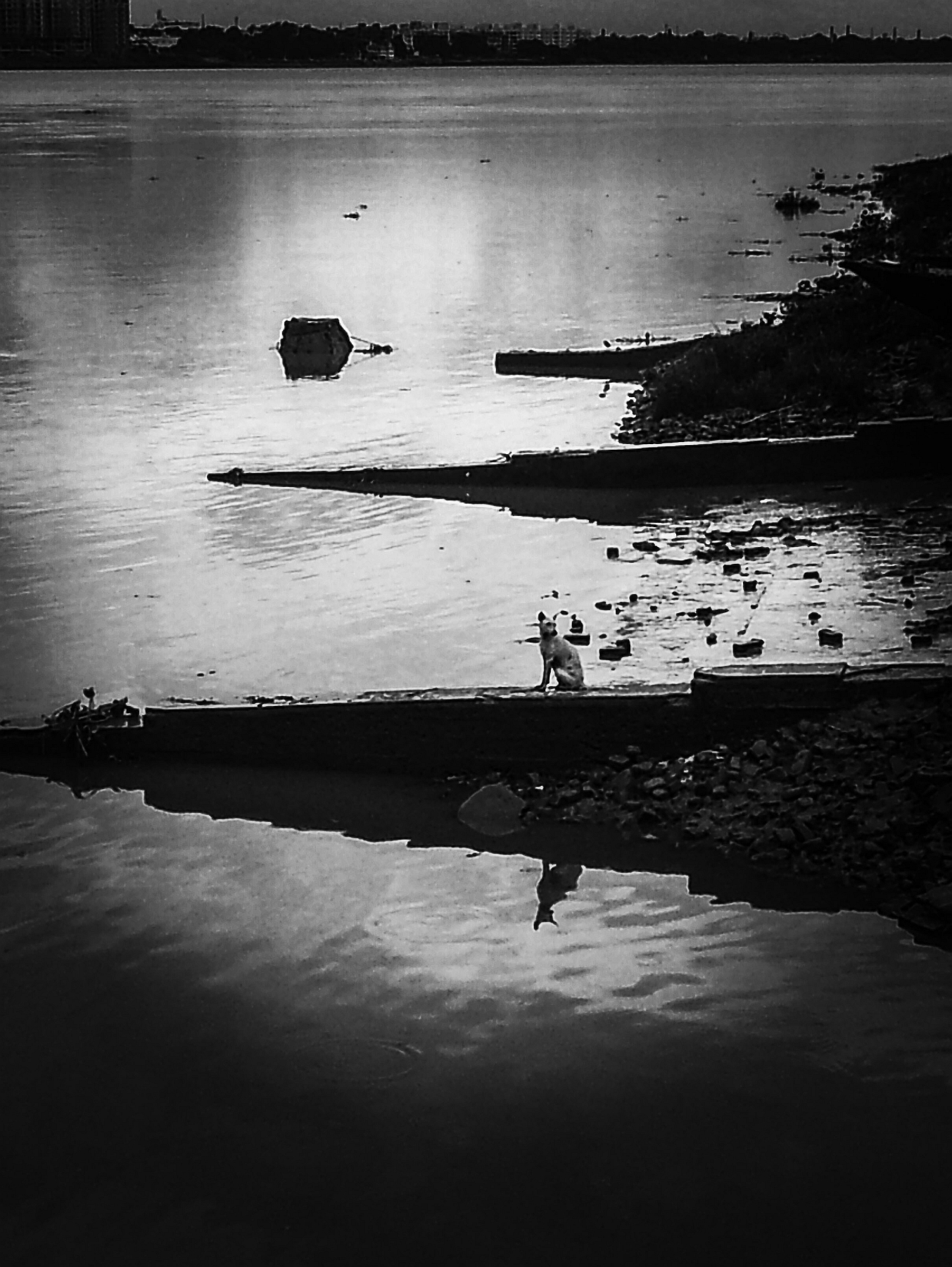 ... a street dog looks back on the river bank at the ferry ghat as if looking for someone to take him across ...