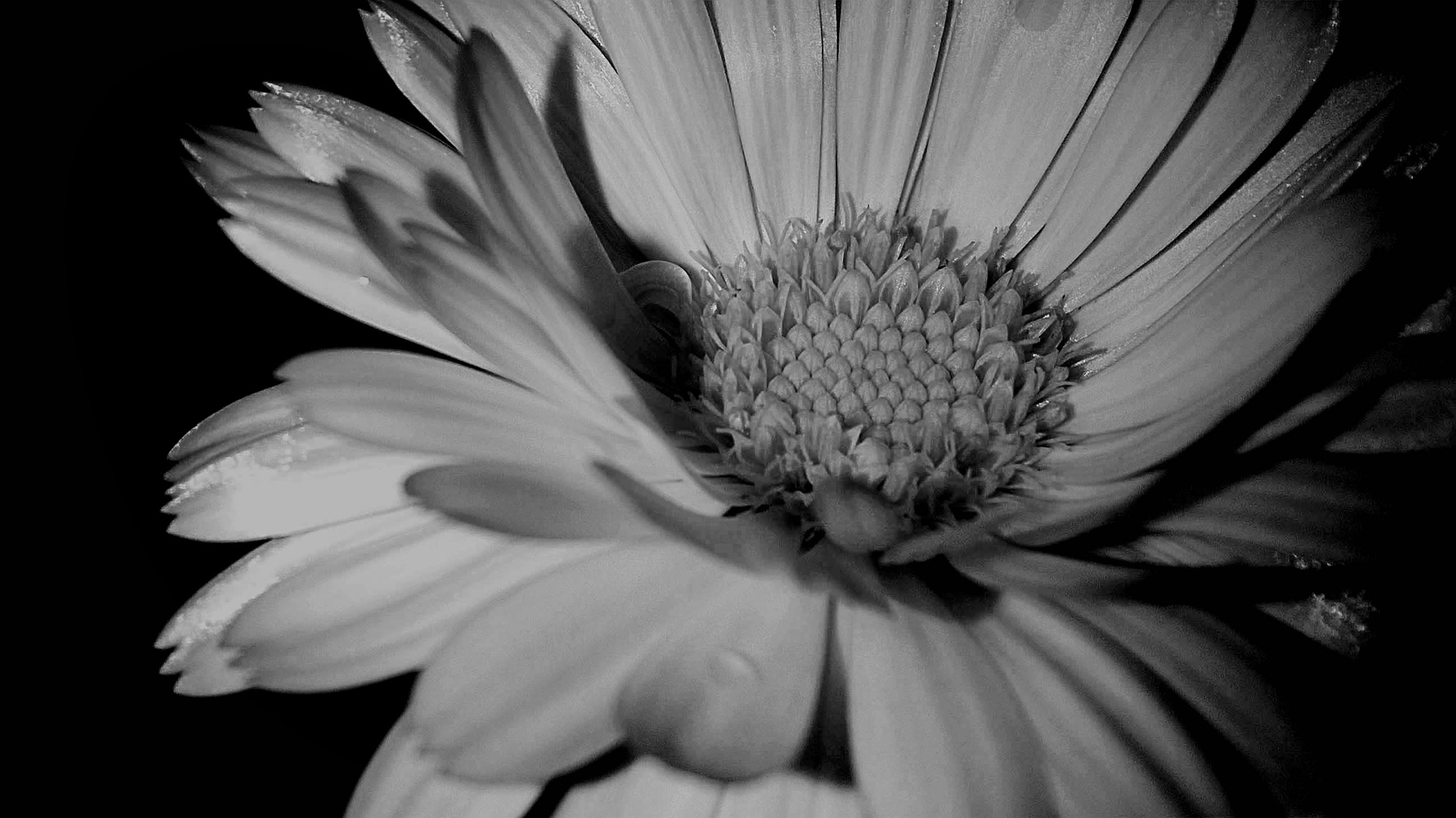 I tried to capture a white flower with black background to show contrast...