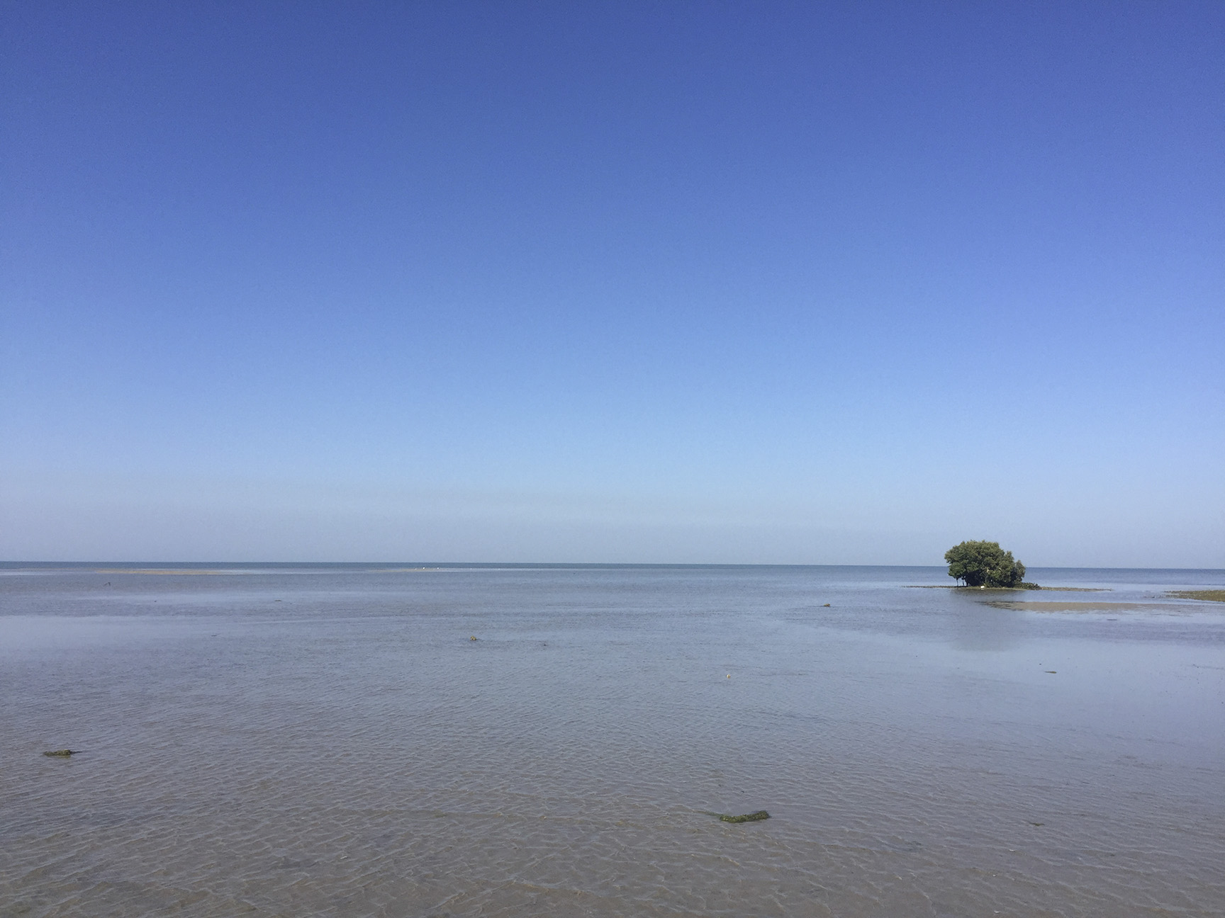Shot at Narara Marine National Park near Jamnagar is a great place to relax, enjoy and feel few aquatic creatures. Took iphone of my friend and shot the beautiful little green buddy standing lonely into the waters.