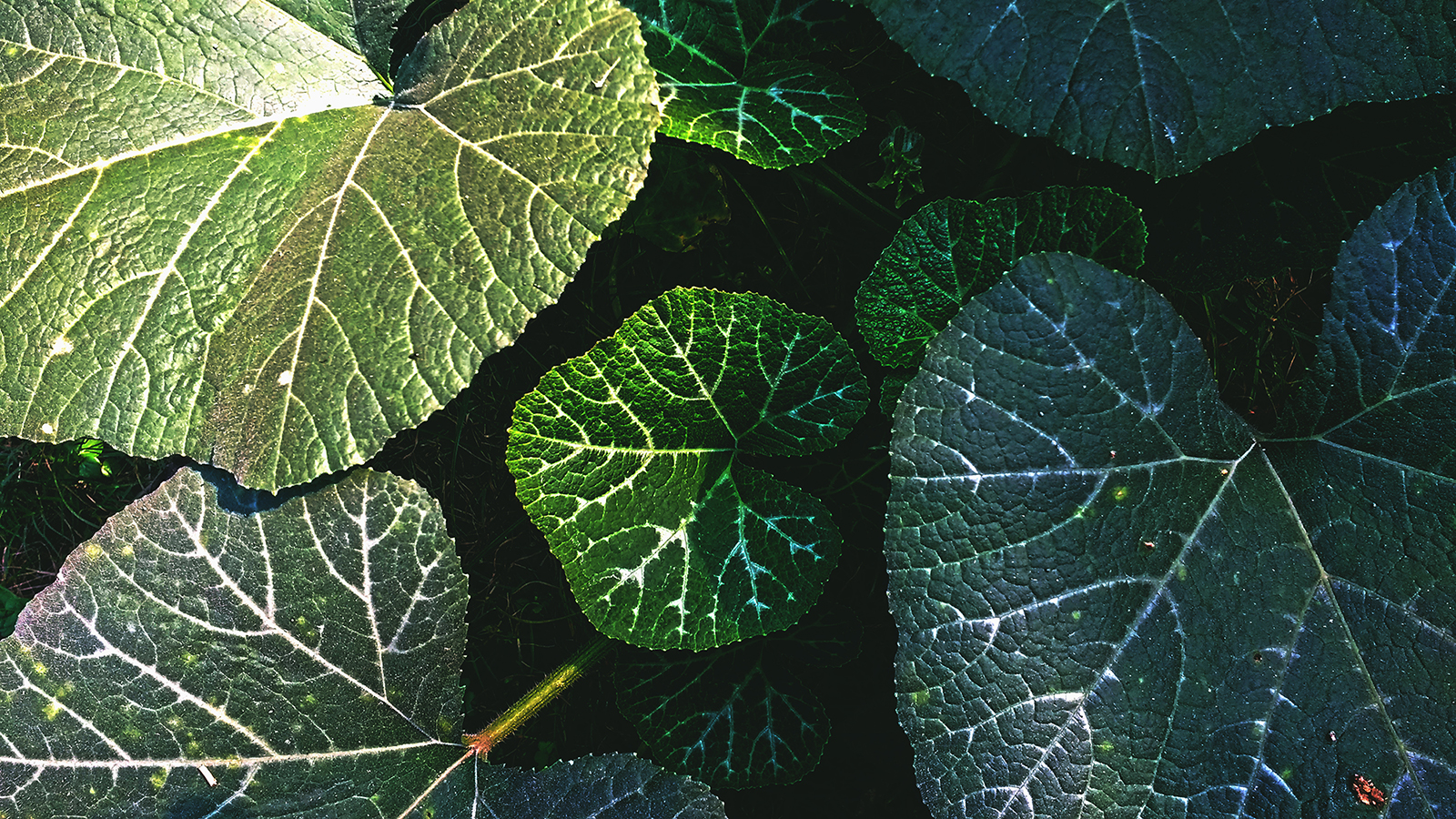 Shadow on leaves.