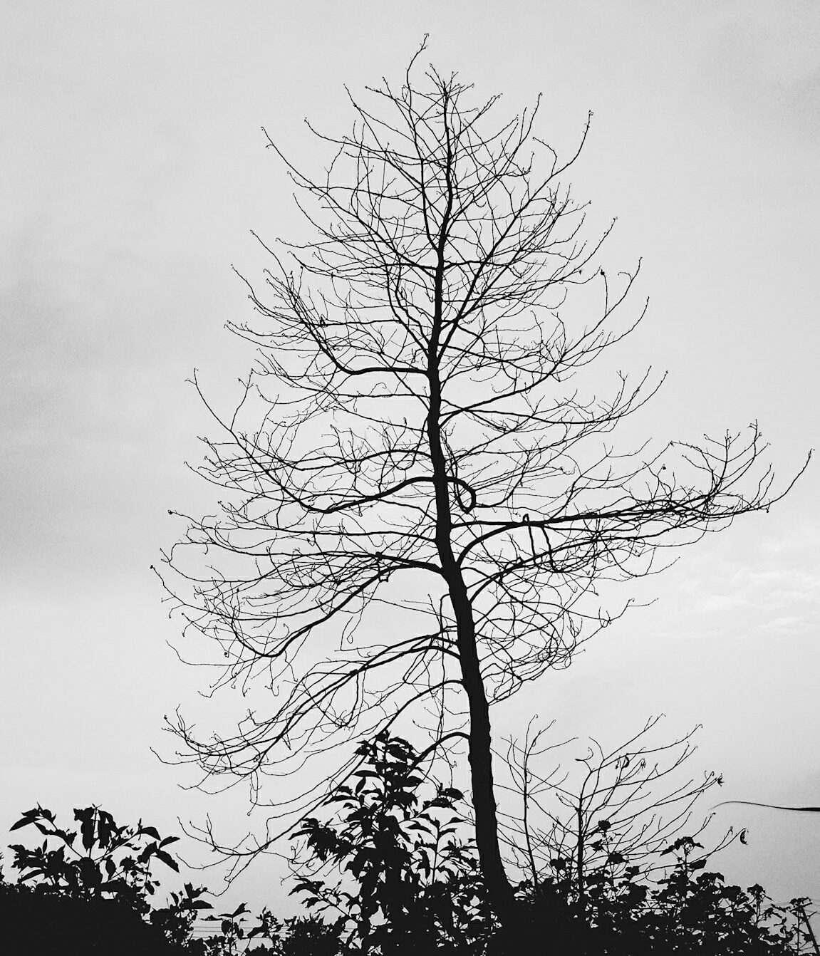 This picture was taken at my village eranji . The empty sky and the empty tree made great photo. I have used monochrome for this shoot.