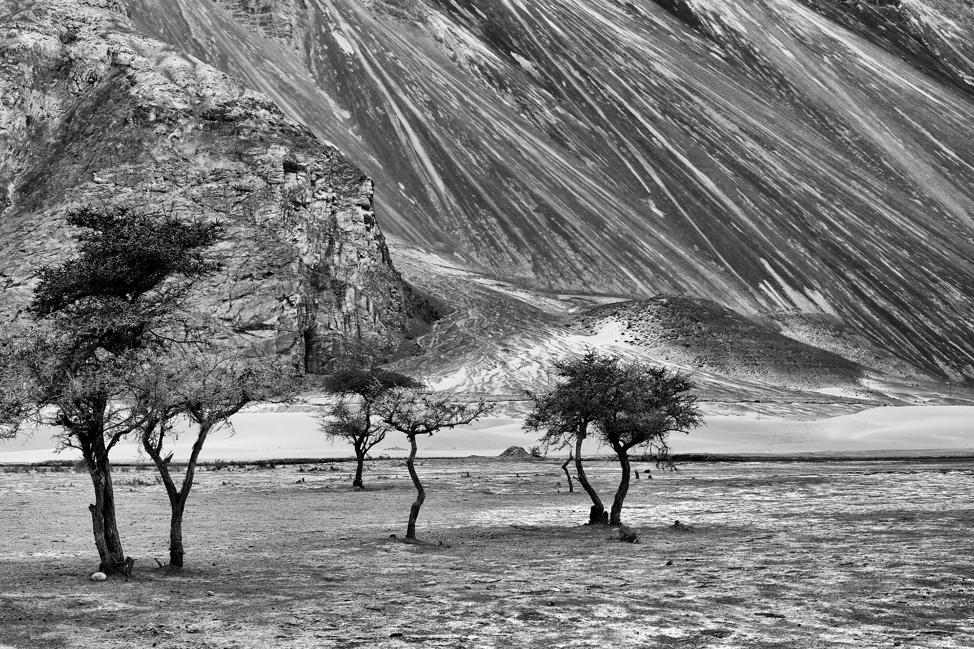 The face of the mountain had two different textures that caught my eye. A crushed paper look and the other one like star trails on earth. These knotty trees bring you back to reality. This is the magical landscape of Nubra Valley.