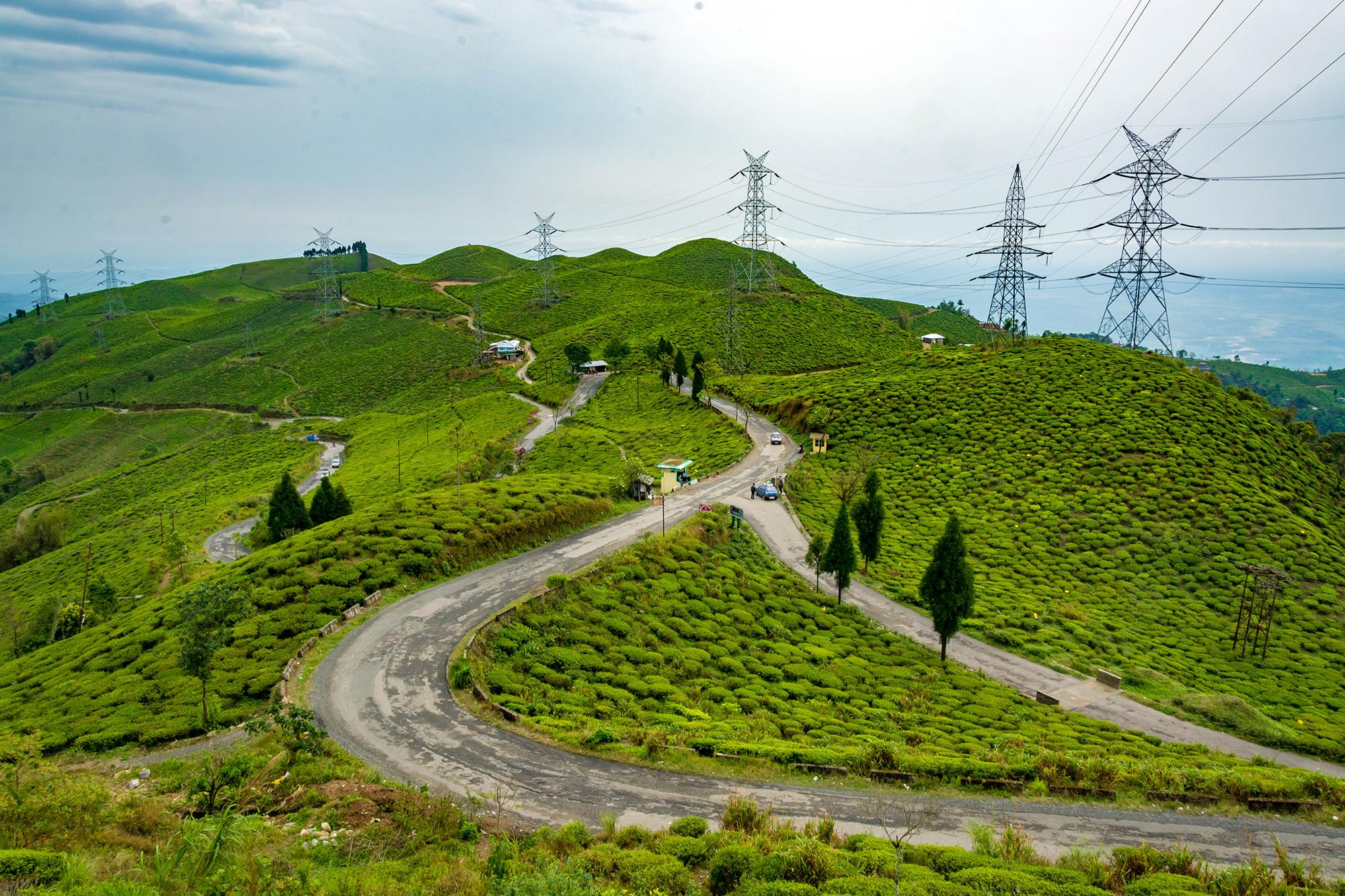 Beautiful tea garden of Darjeeling