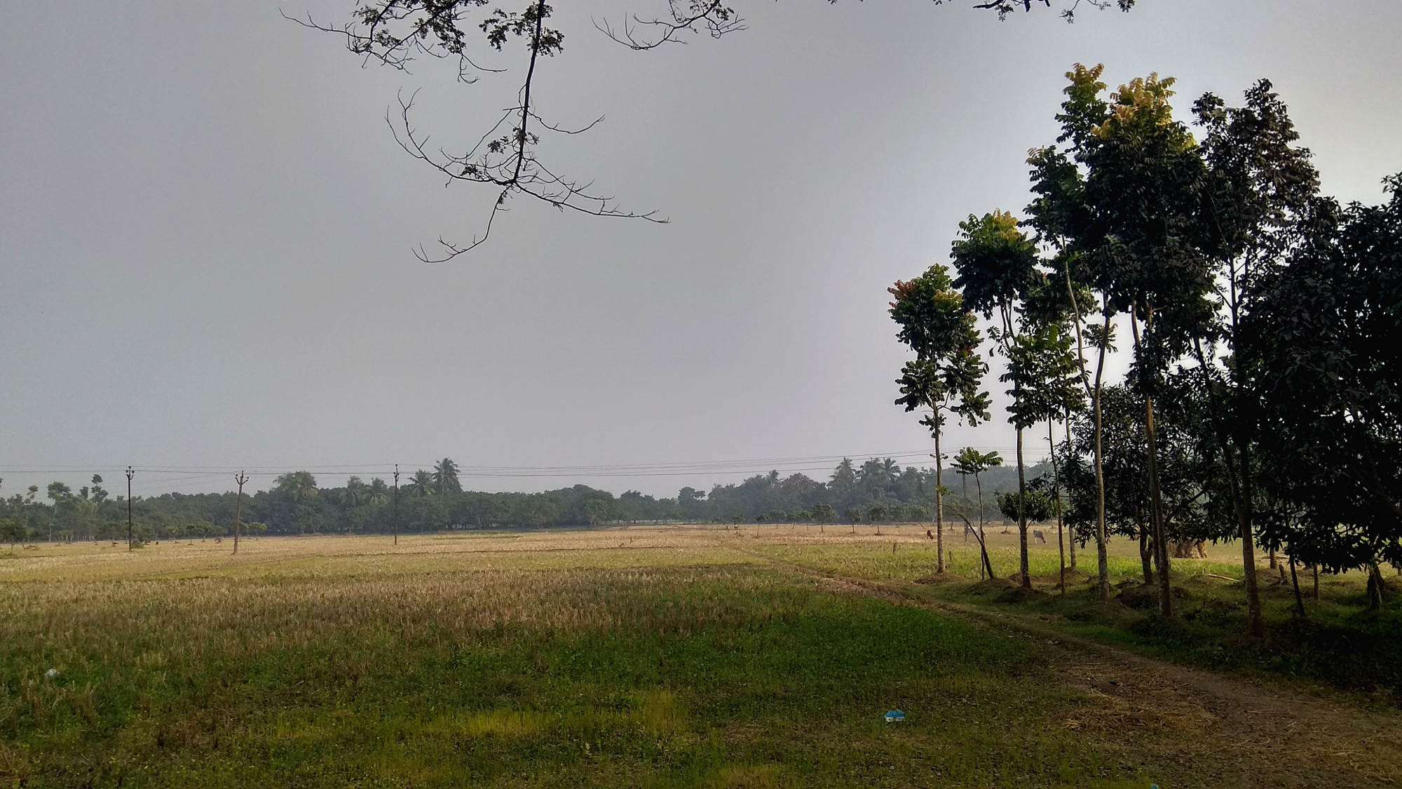 The picture portrays the beautiful landscape of our rural agricultural areas.