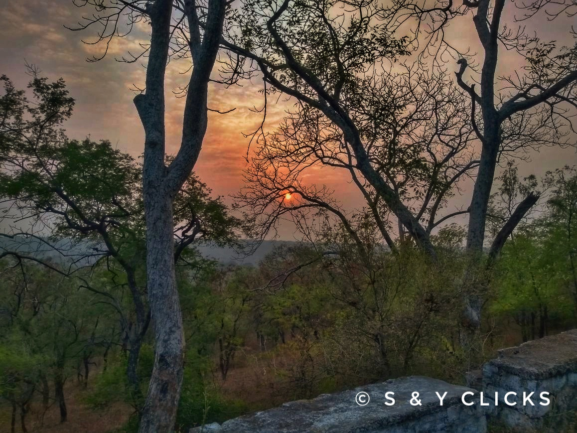 Shot when travelling through the hills of mukundra forest in kota rajasthan.