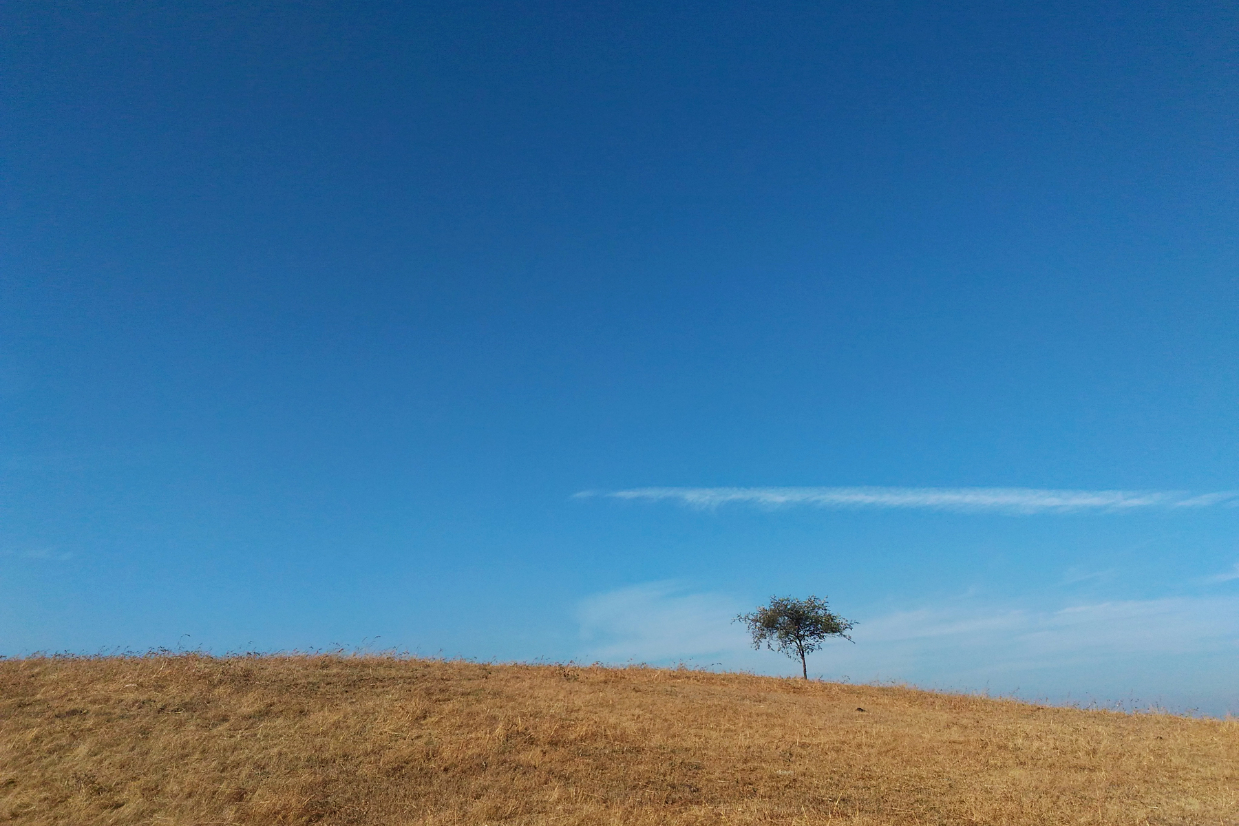 A lone tree along with the kshitij. Taken from mobile phone.