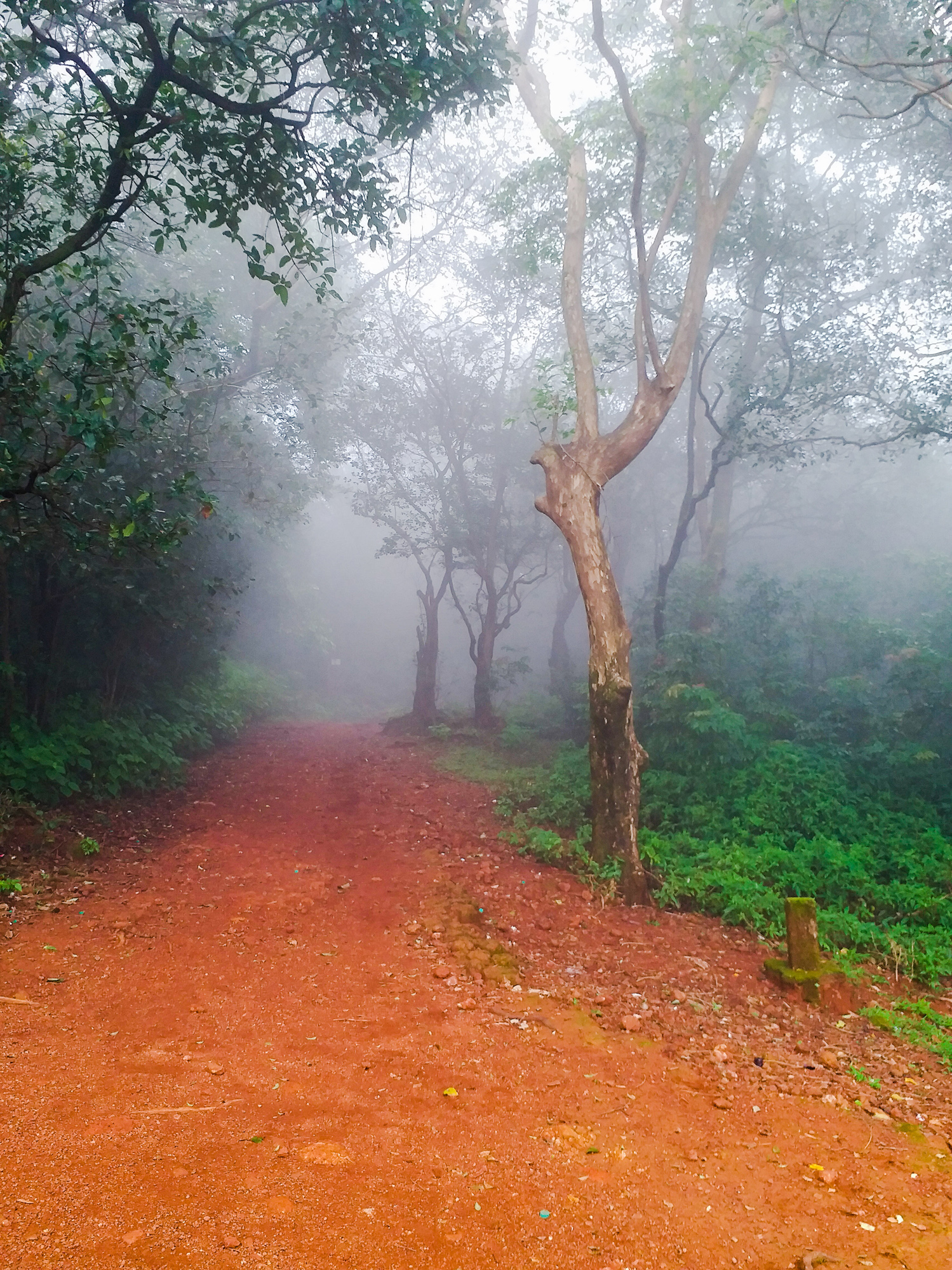 At Matheran, when dense fog covered the roads among the trees