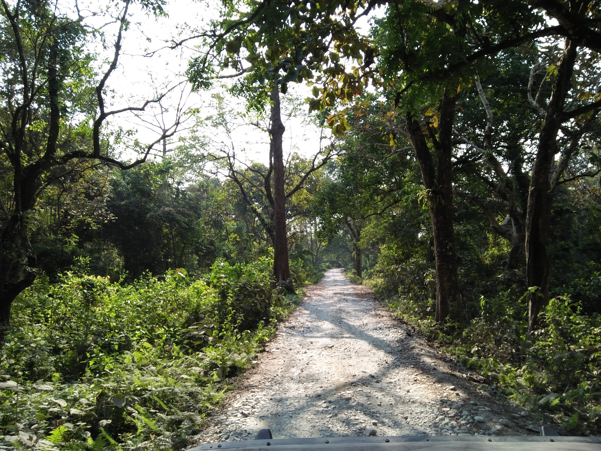 MOVE INTO THE WILDERNESS TO ENJOY THE ACTUAL BEAUTY OF NATURE .. INDEED THE ROAD IS THE LESS TRAVELED ONE BUT IT LEADS TO BLISSFUL DESTINATIONS. Loc- Manas National Park