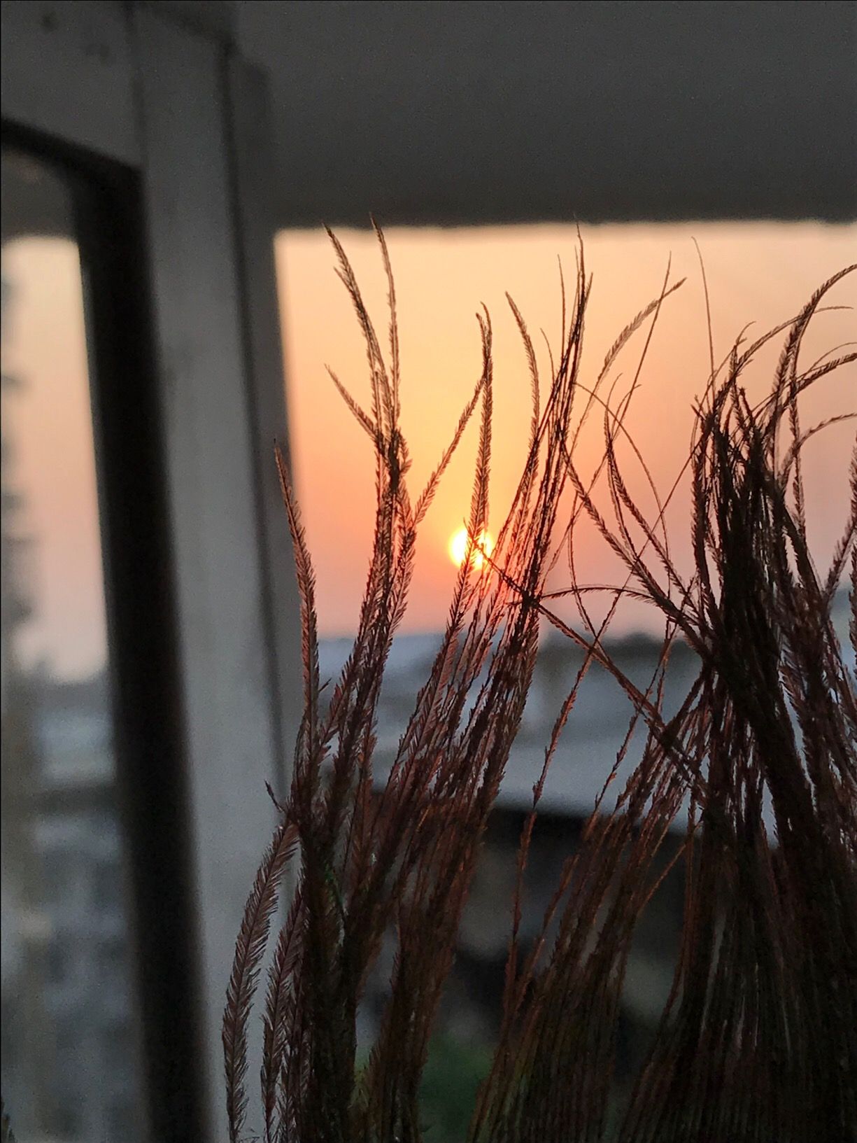 I found a peacock feather from my book, which i used as bookmark. While watching sunset I used feather to get a perfect click from my window.