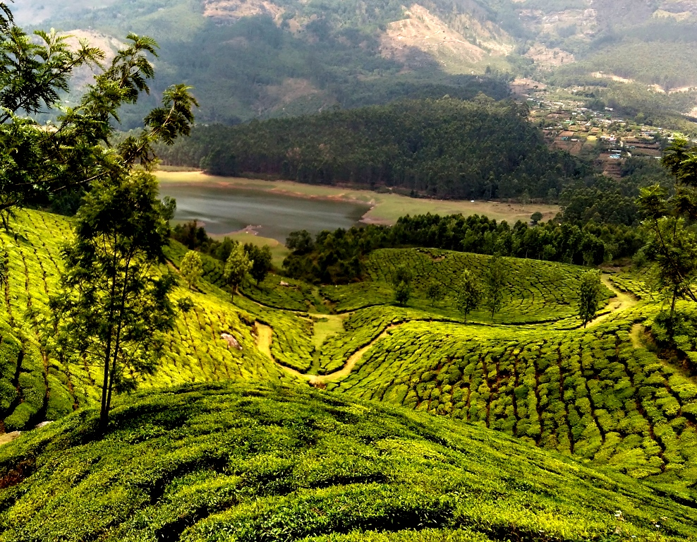 The clouds raise the curtain and welcome summer to the tea plantations of Munnar.