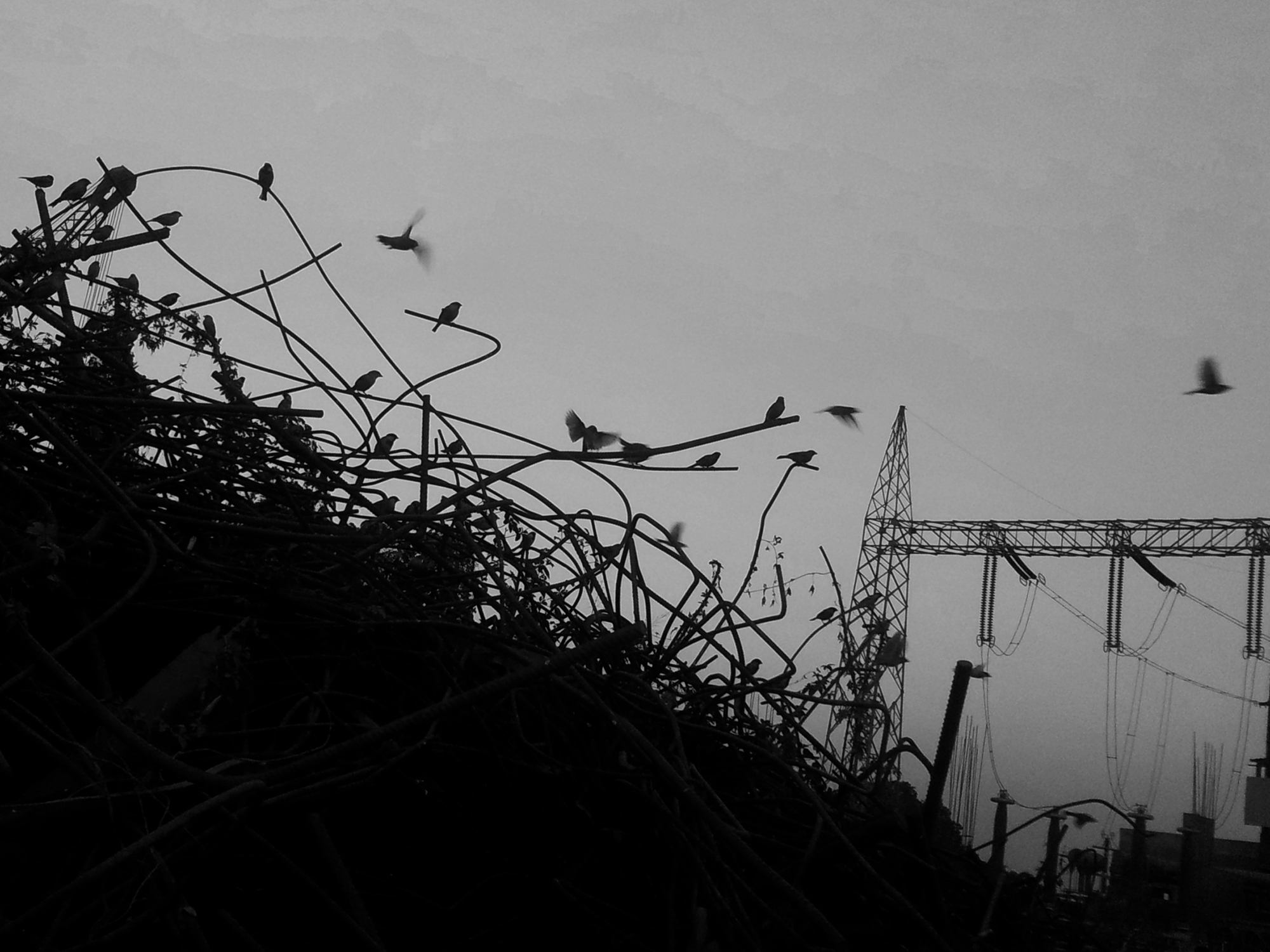 This shot was taken near a heap of scrap TMT bars where lots of sparrows were sitting.It felt really great to see sparrows but at the same time it was painful to see them resting on steel bars instead of tree branches.This shows the industrial growth with deterioration of environment