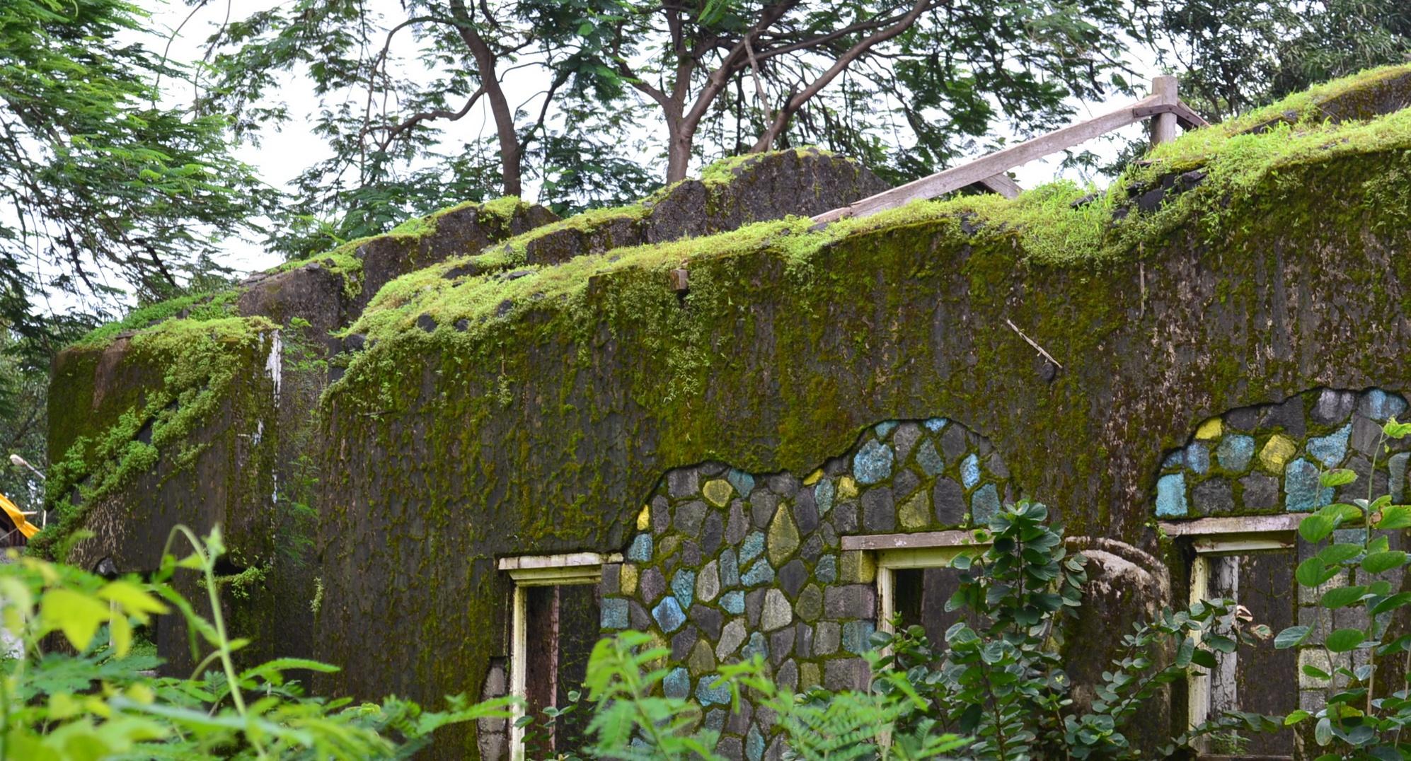 Re-forestation (Bhandardara).