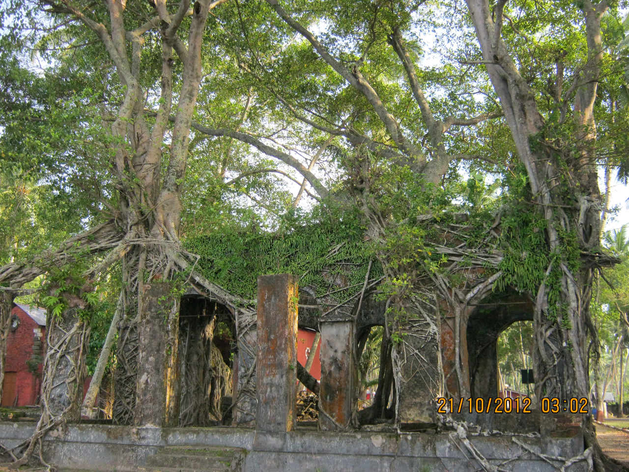 the old British buildings of Andaman island in ruins today, with trees growing above them