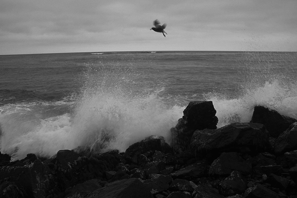 Lonely bird flying over the rocks and waves of mighty Atlantic Ocean in Peru.