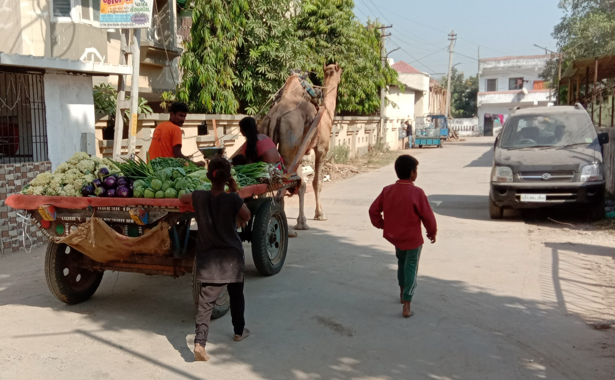 In Ahmedabad Gujarat this is a normal picture where vendor sell vegetables on camel cart. But for many  people this  is something new. One can see a whole family is selling on cart and they are searching for customers. I wanted to frame this as this may be an unusual concept for many.