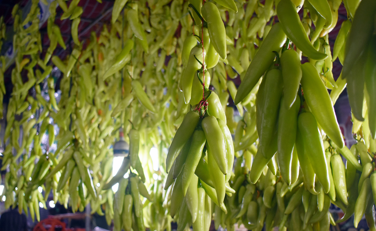 Chillies used for making a snack called 'Baji' being hanged in front of a 'Baji Shop'. A view from Edapally, Kerala.
