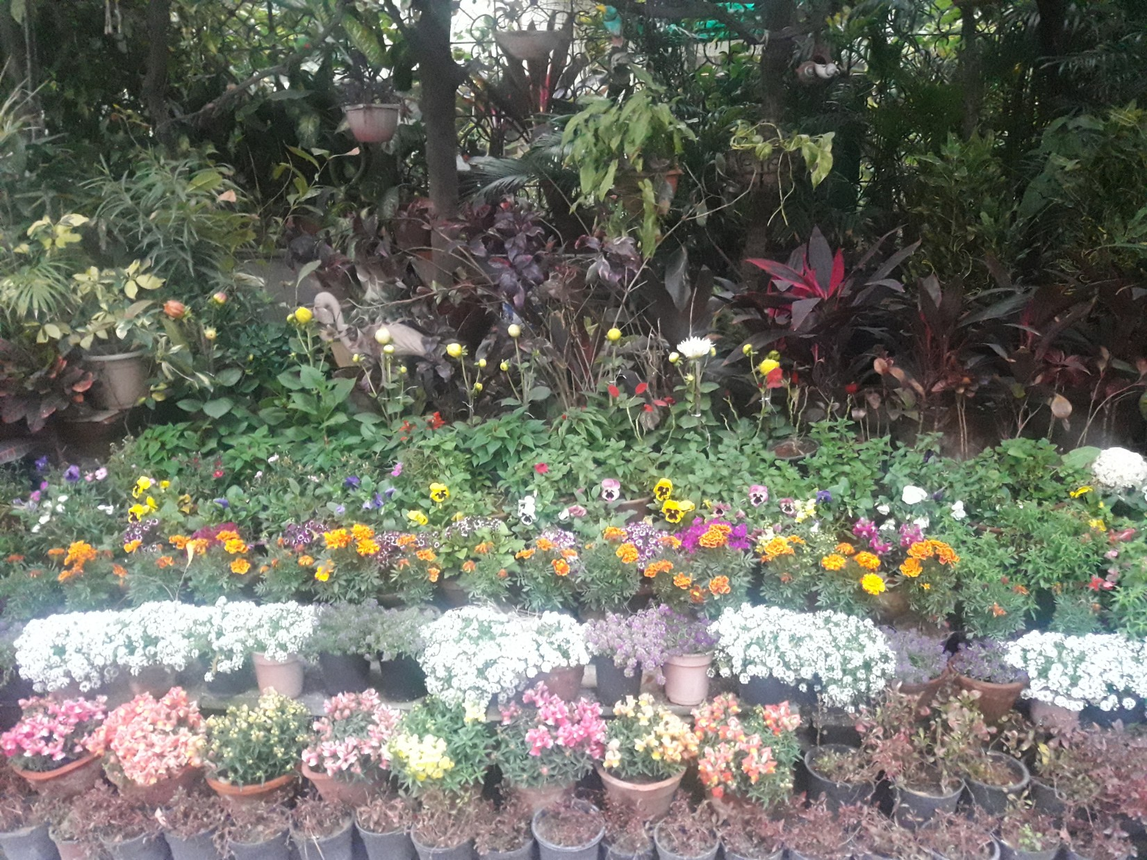 A beautiful garden ,captured with my phone camera. The essence is the variety of flowers and shrubs