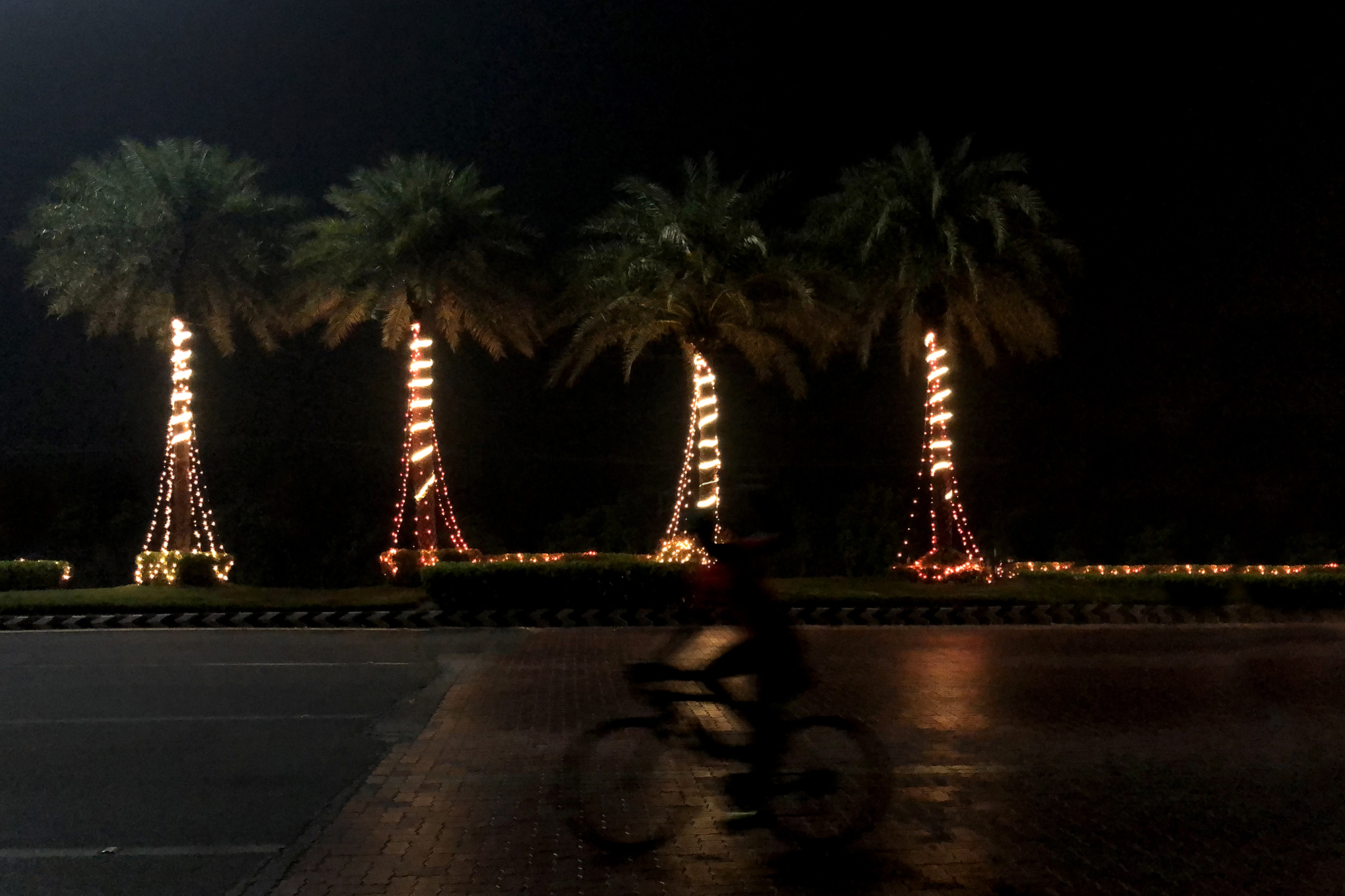 Winters in Chennai are barely felt. But you can see winter in the decorations around the city as Christmas and New Year come by. One such winter night when the city was decked up in twinkling lights, I saw this cyclist swiftly ride by a row of decorated trees near a toll gate. It looked like the lights were celebrating his crossing the finish line at a cycling competition!