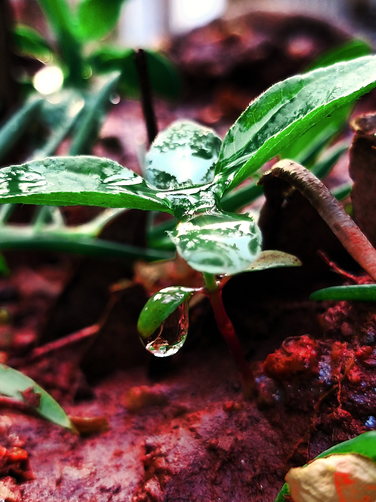 Every drop is important in our life....... you have to enjoy before the drop being evaporated...