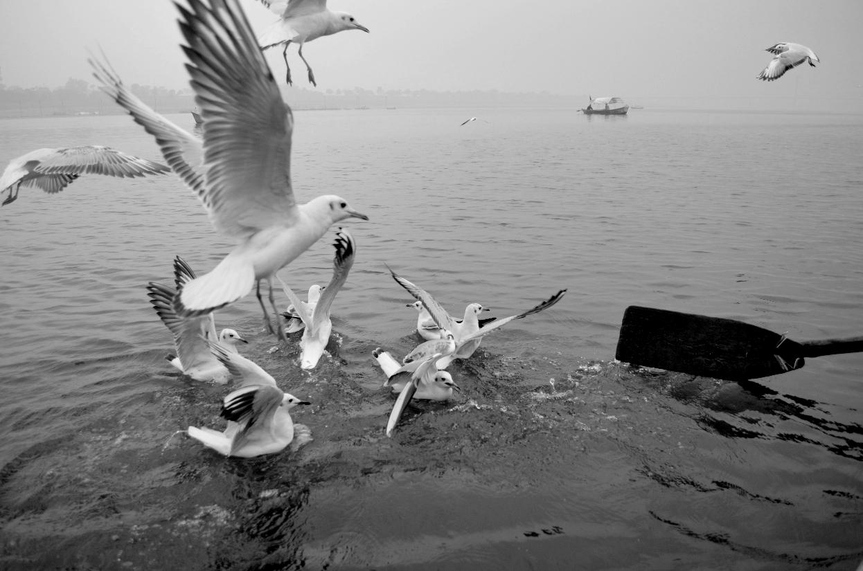 During boating at Triveni Sangam at Allahabad I have taken this photo.