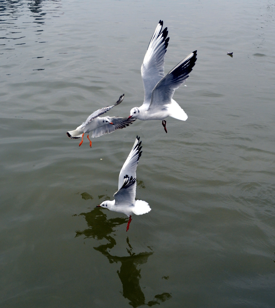 During boating at Triveni Sangam at Allahabad I have  taken this picture. I deem it is bird's paradise.