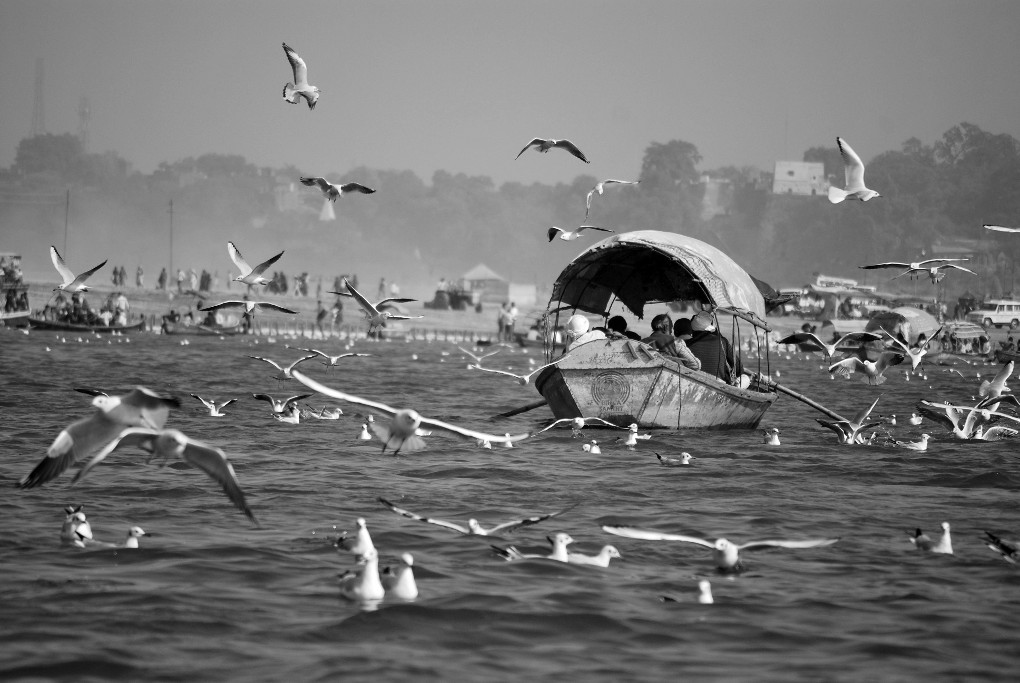 During boating at Triveni sangam at Allahabad I have taken this photo. I deem it is a Bird;s paradise.