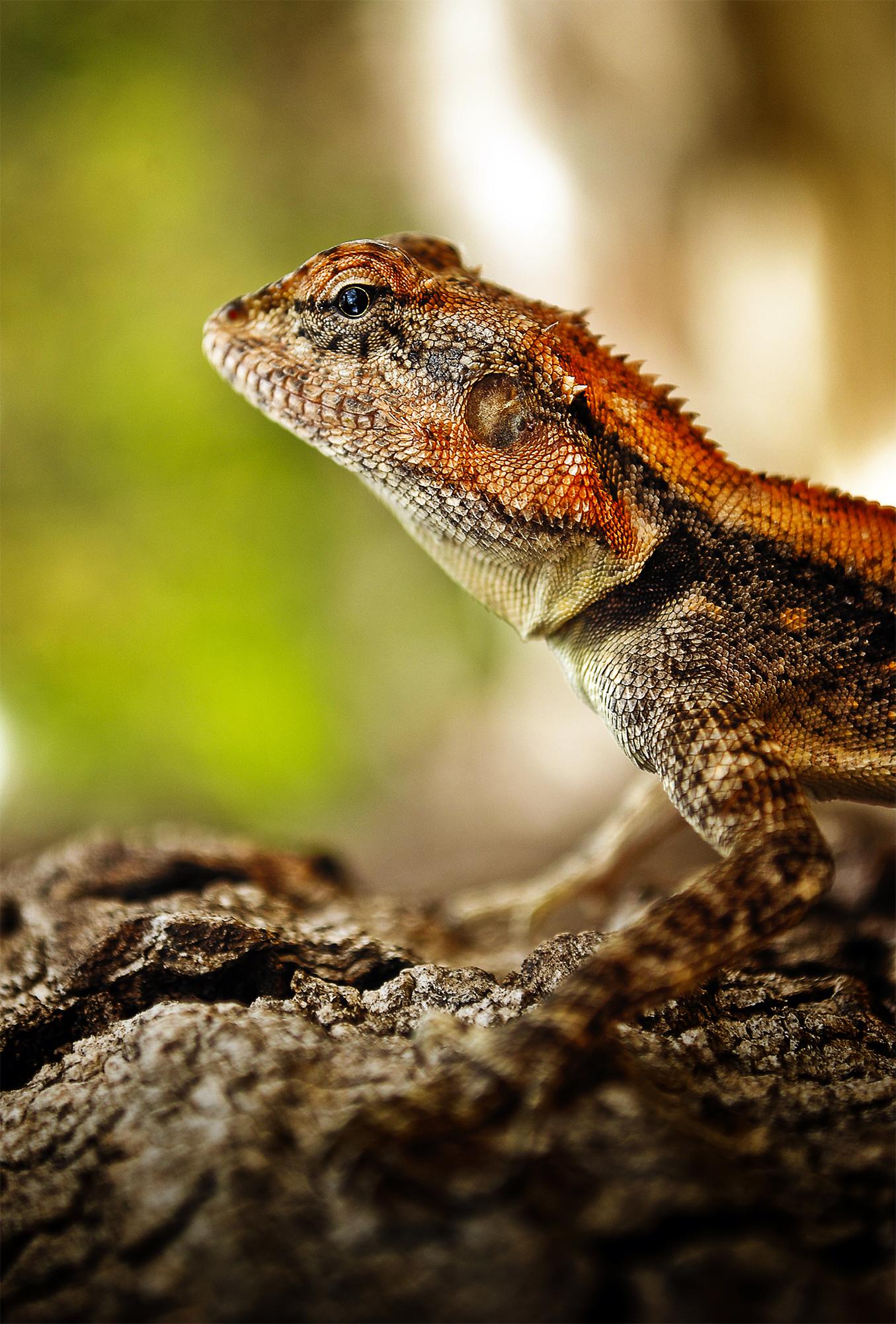 I am amazing because i never get bored; Chameleon..