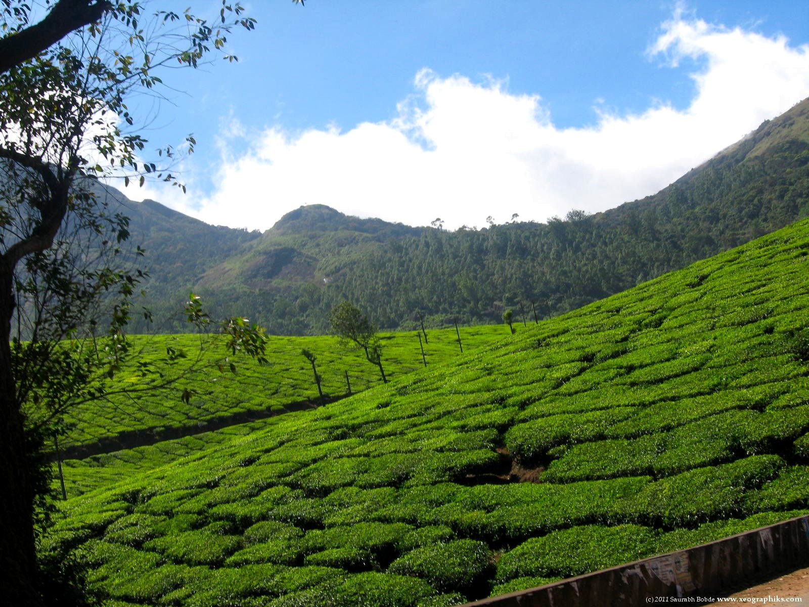 A stunning vista and landscape is set ablaze by the smoking clouds in the beautiful tea plantations at Munnar, Kerala.