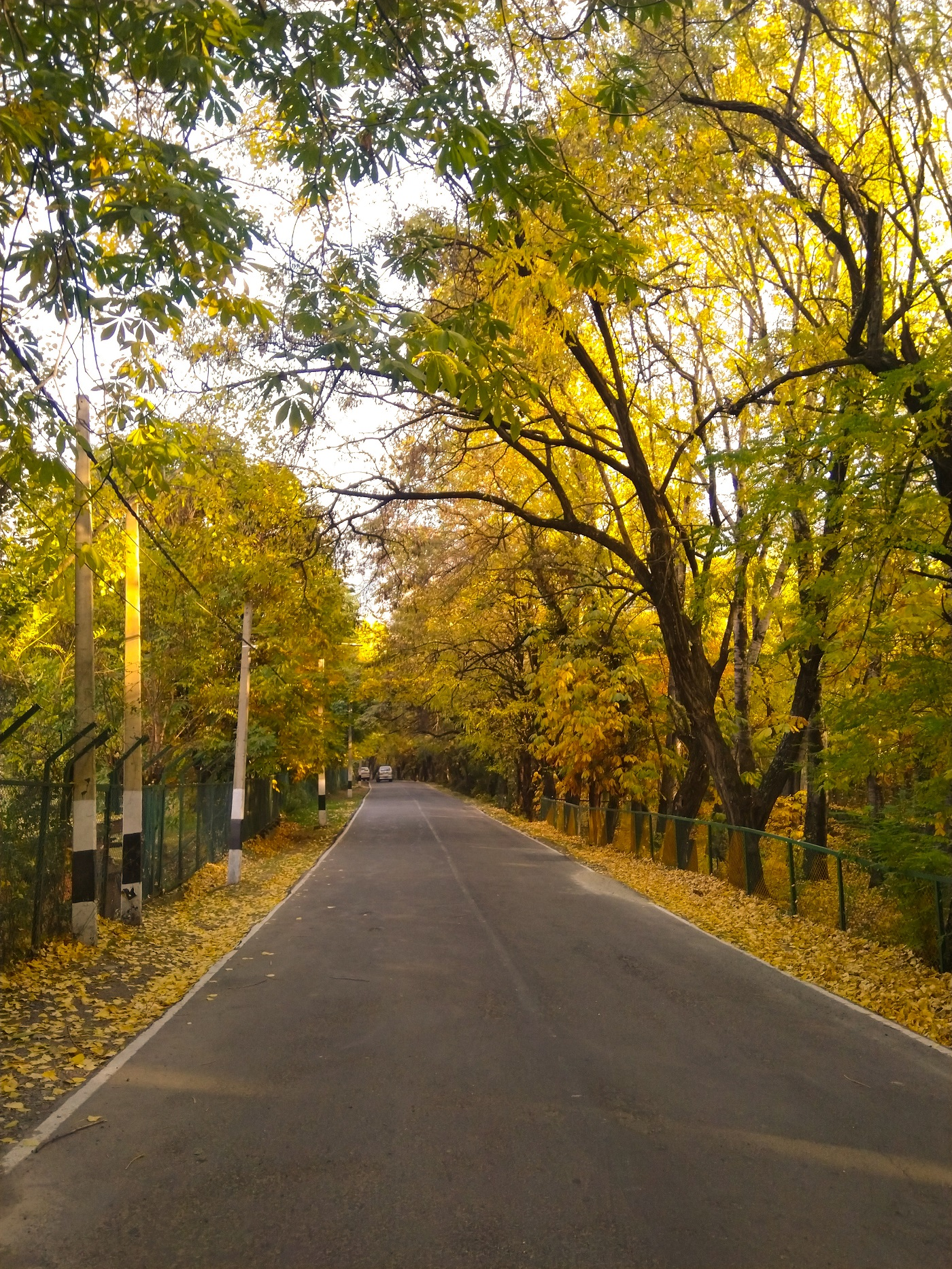 This is the most beautiful road in Srinagar.