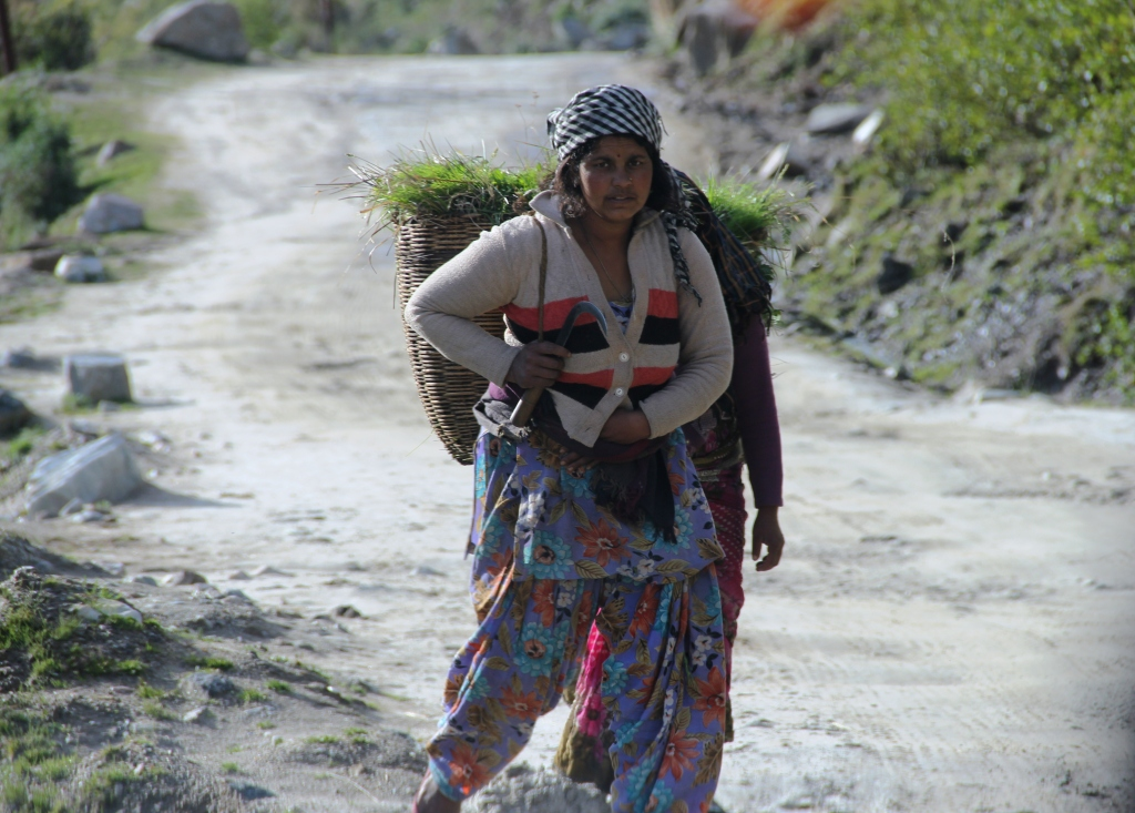 A WOMAN IN MALARI JOISHIMATH ROUTE UTTARAKHAND GOING BACK TO HOME AFTER TAKING GRASS FOR THEIR CATTLES.