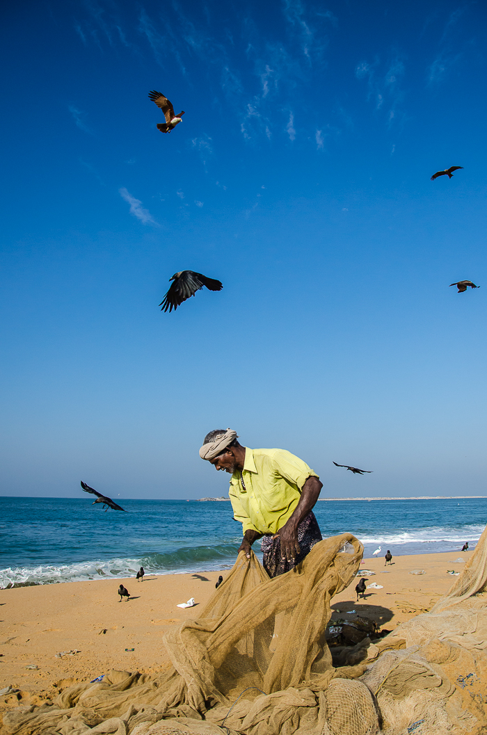 Fishermen are not the only one checking fish in the net. Waiting for their chance to grab are birds like crows, egrets and Brahmani Kite who constantly monitor the scene to take their share of the bounties of Ocean
