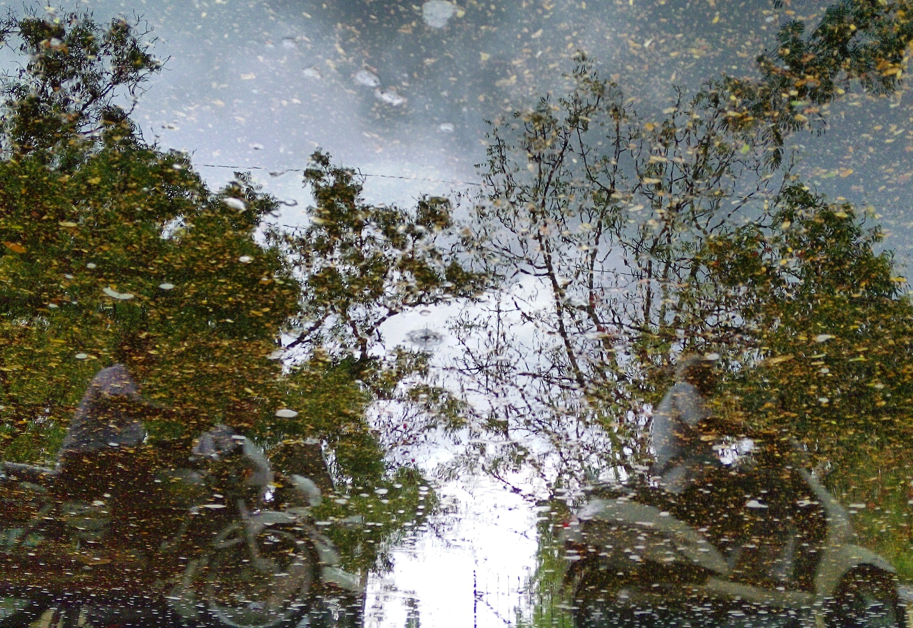 Trees reflected in a pool of water on road