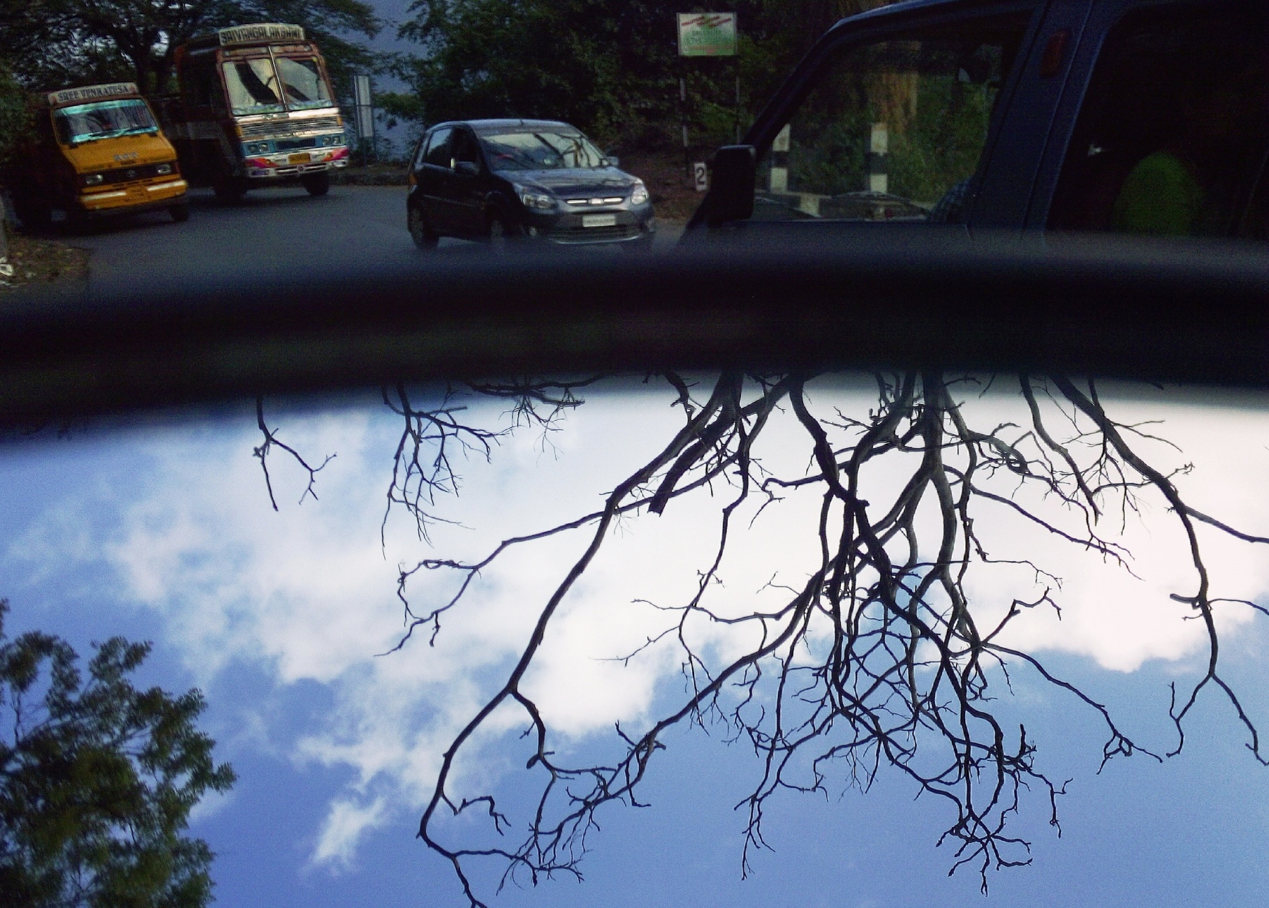 A view of a trees upside down in a mirror !