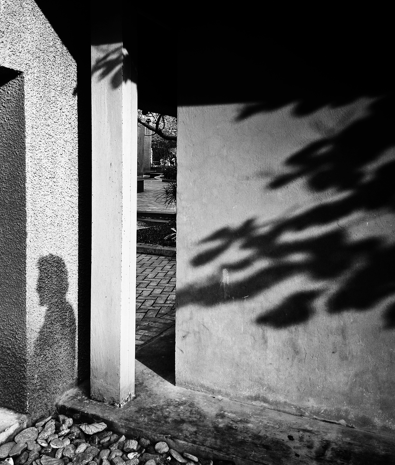 Its only tree and the shadows it gives that provides my dark passenger the solace it needs.