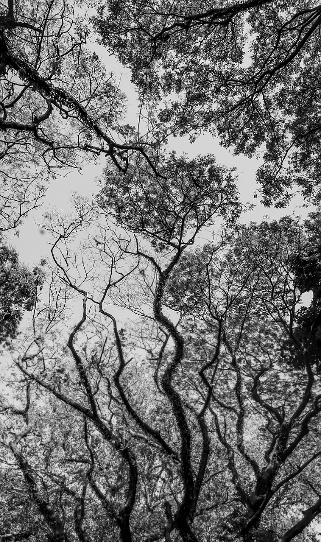 I was in Kerela which is said to be god's own country and I was always wondering why they call it that. By I soon realised that because of the abundance of trees or natural resources they might call it. This shot is captured as an abstract showing the unending patterns of tree and it's branches like a life cycle. It also shows a pattern like a fire.