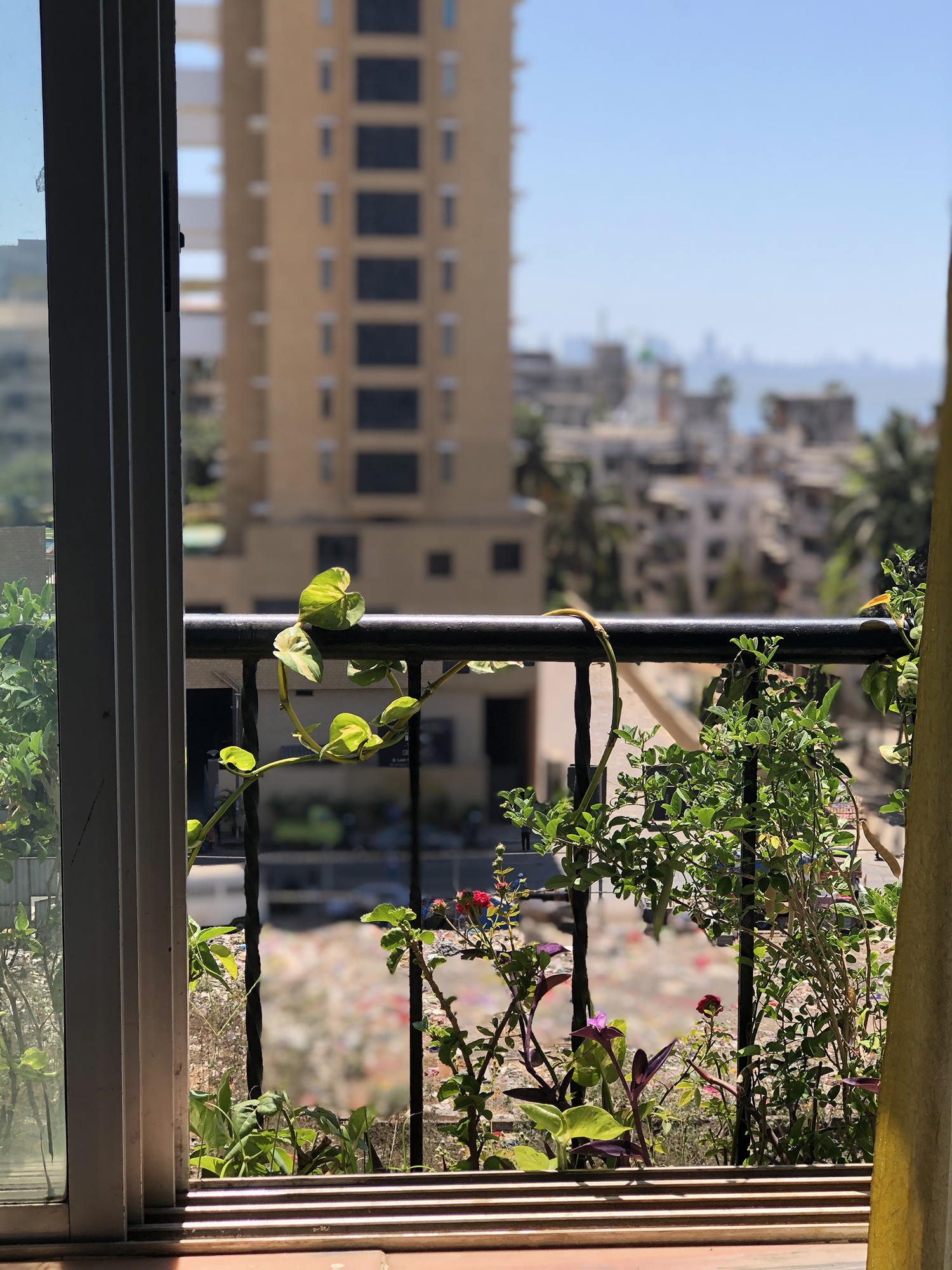 the flowers bloom and frame the cityscape, in comfort and solace.