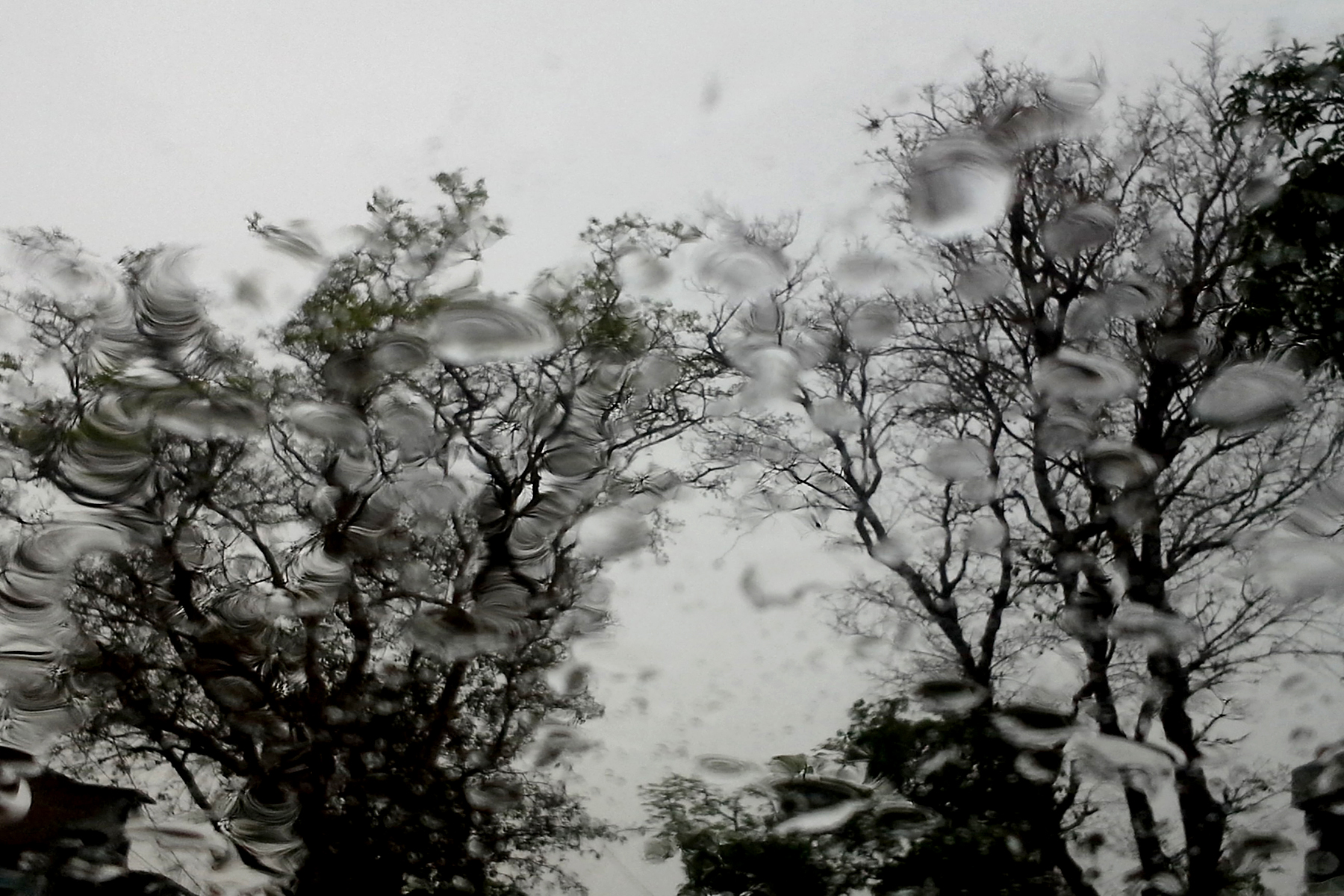 I was driving my car when its starts pouring. I found very interesting patterns of trees through my wind shield. Water drops on the glass adds the abstract feeling of the overall scene.