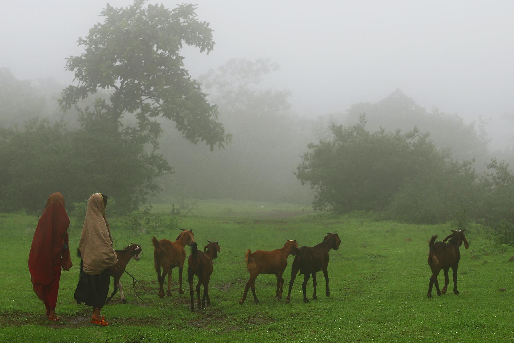 Monsoon misty atmosphere has rejuvenate charm. Human - urban or rural, animals get refresh by it .