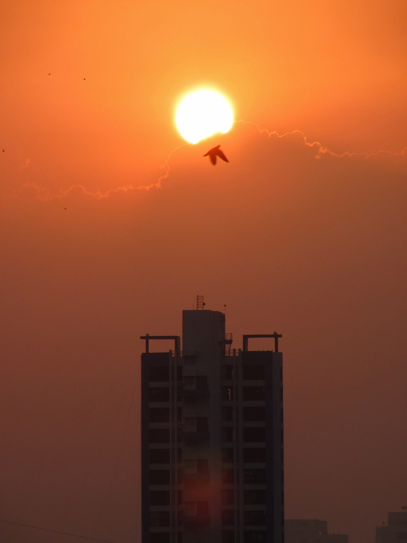 The sun emerges from the clouds and the bird begins its day, only to be seen atop a high-rise building from my vantage point