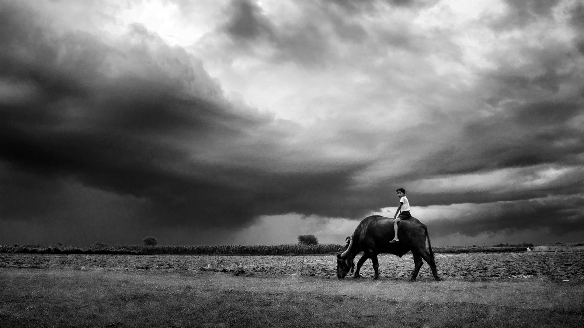 The village boy is having fun with his Buffalo Ride and the sky is also in playful mood with the rainy dark clouds.