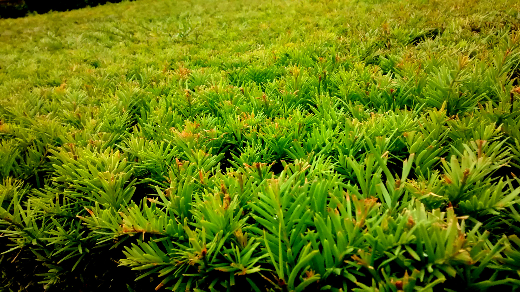 Lawn outside office
