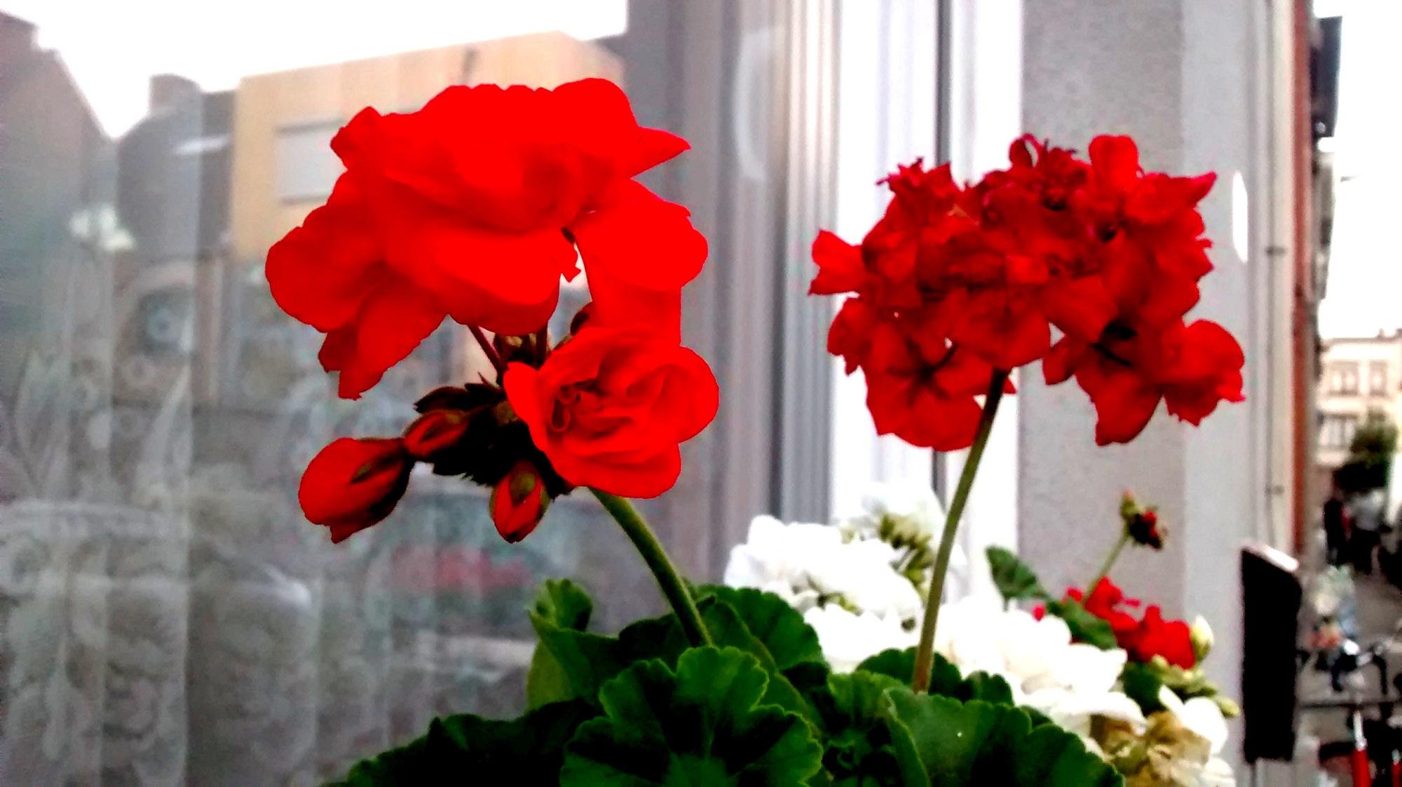 Flower outside strangers house