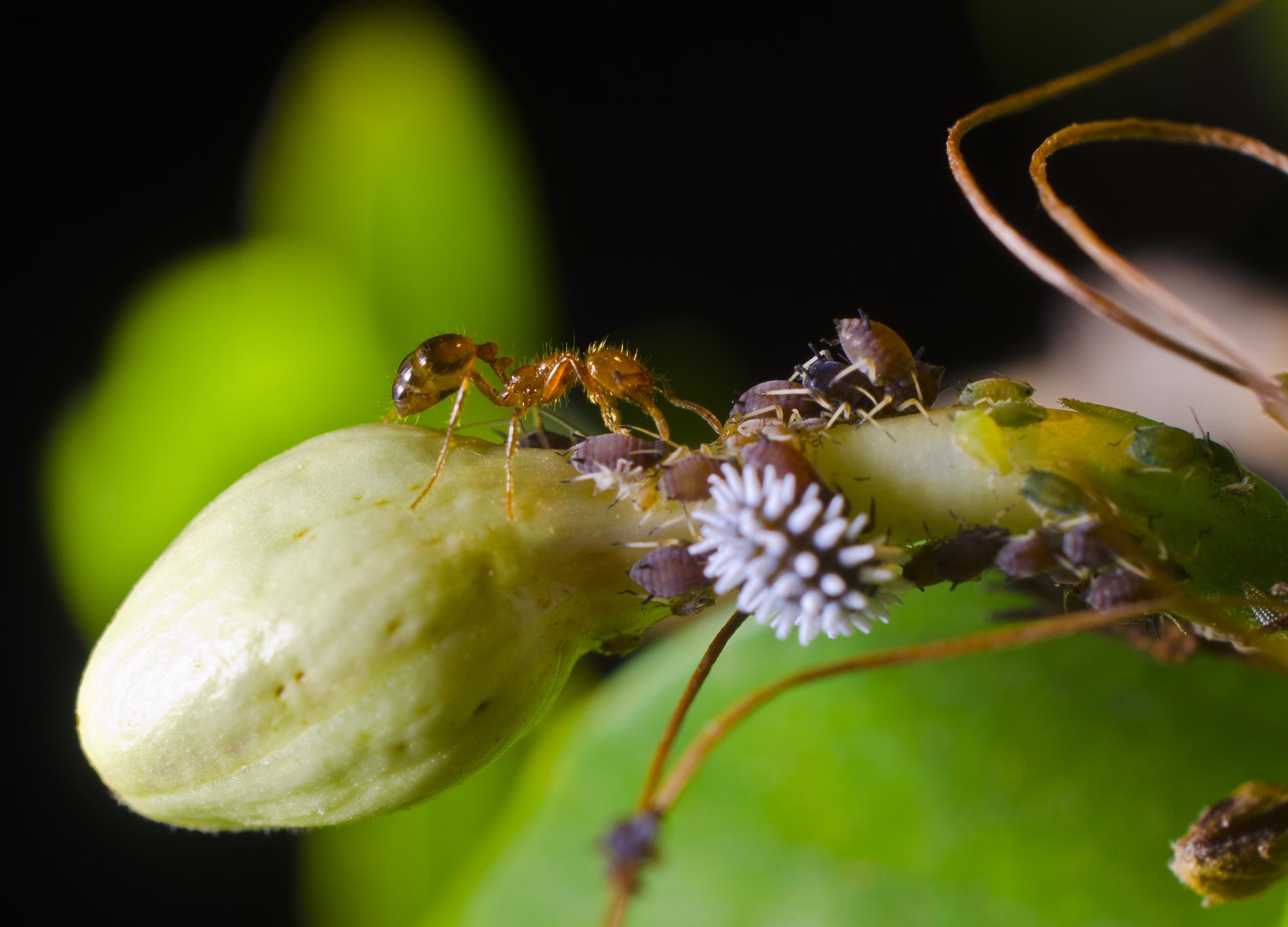 Tiny macro world of Ants