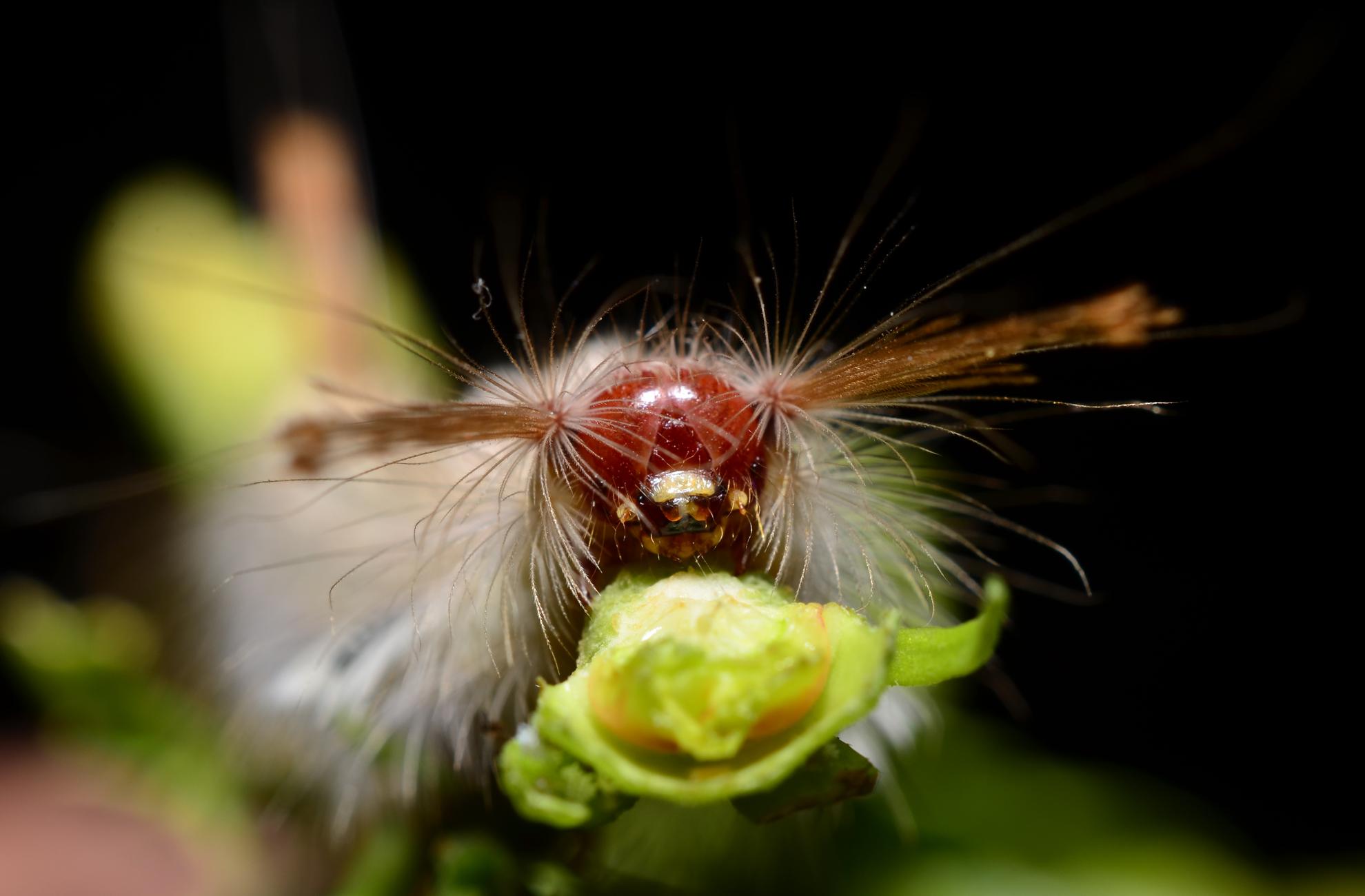 portrait of a Moth caterpillar