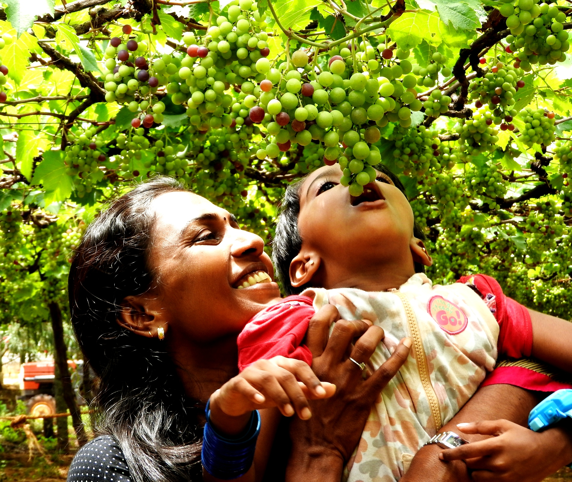 I was always captivated by the spirit of the kid to have a bite of grapes directly from th e wine yard.This photo oppurtunity arrived when I ask them to pose for a snap.What I want to capture was that the joyful mommemts of having the grapes. Camera :  Nikon Coolpix P 610