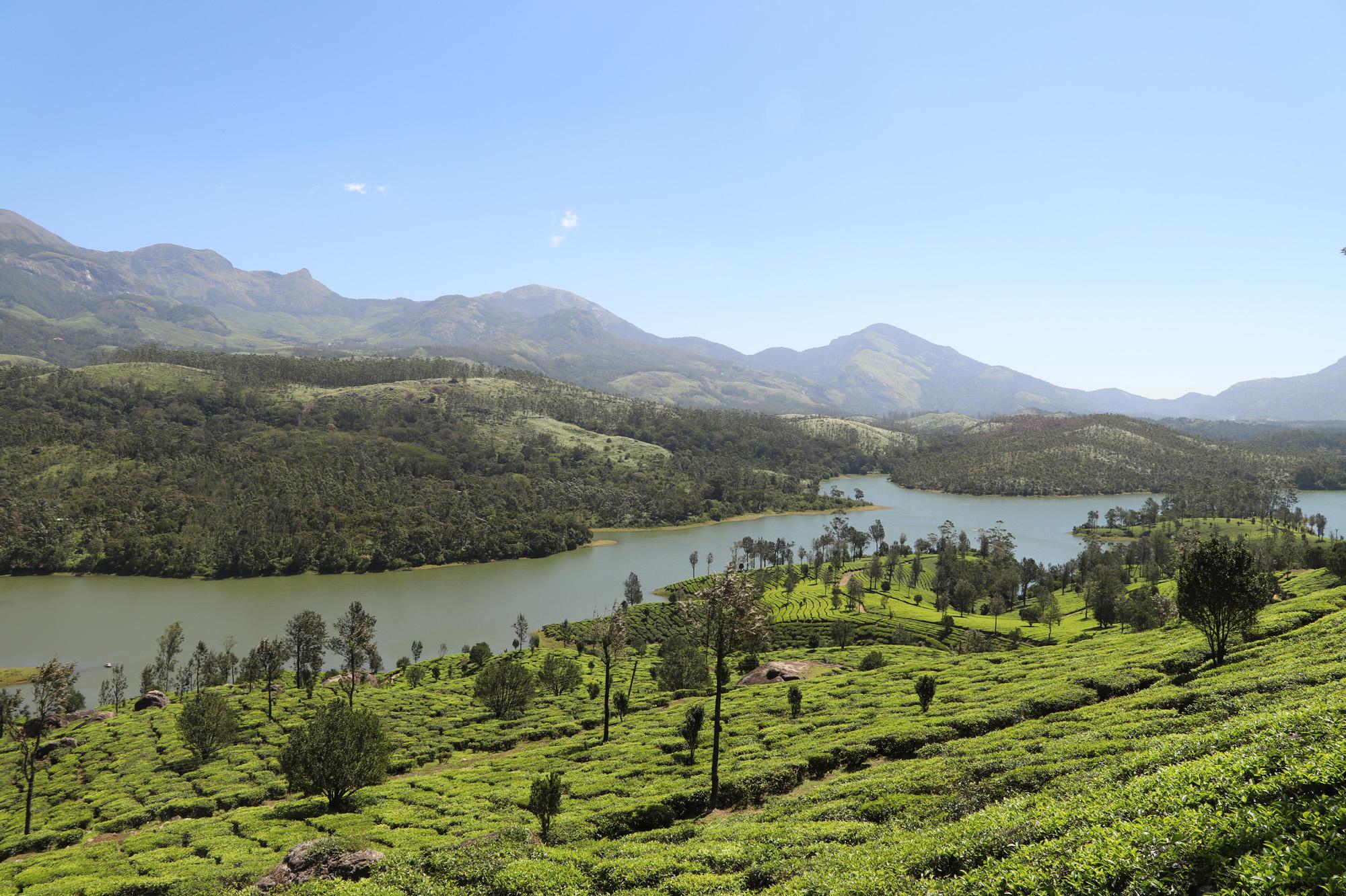 The  enchanted views of Kerala tea gardens